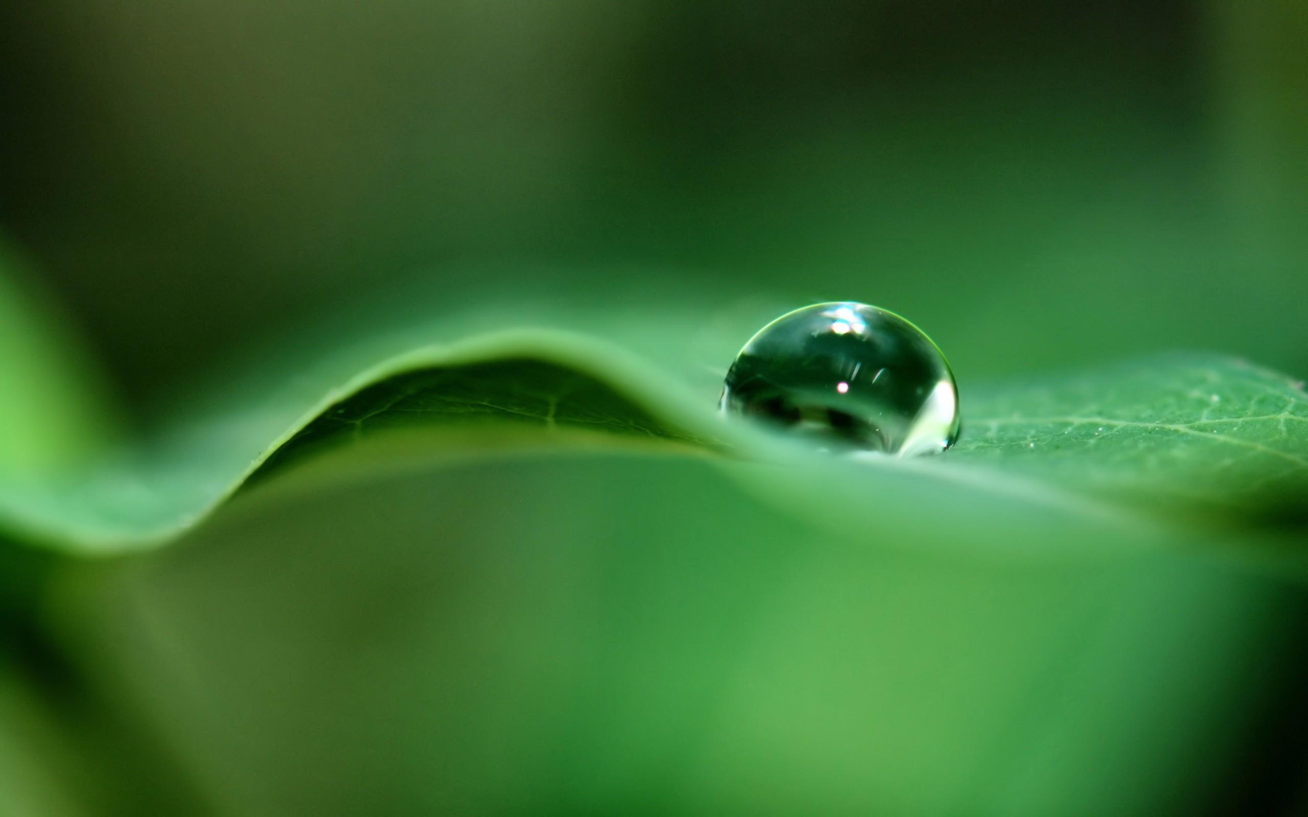 природа листья капли вода загрузить