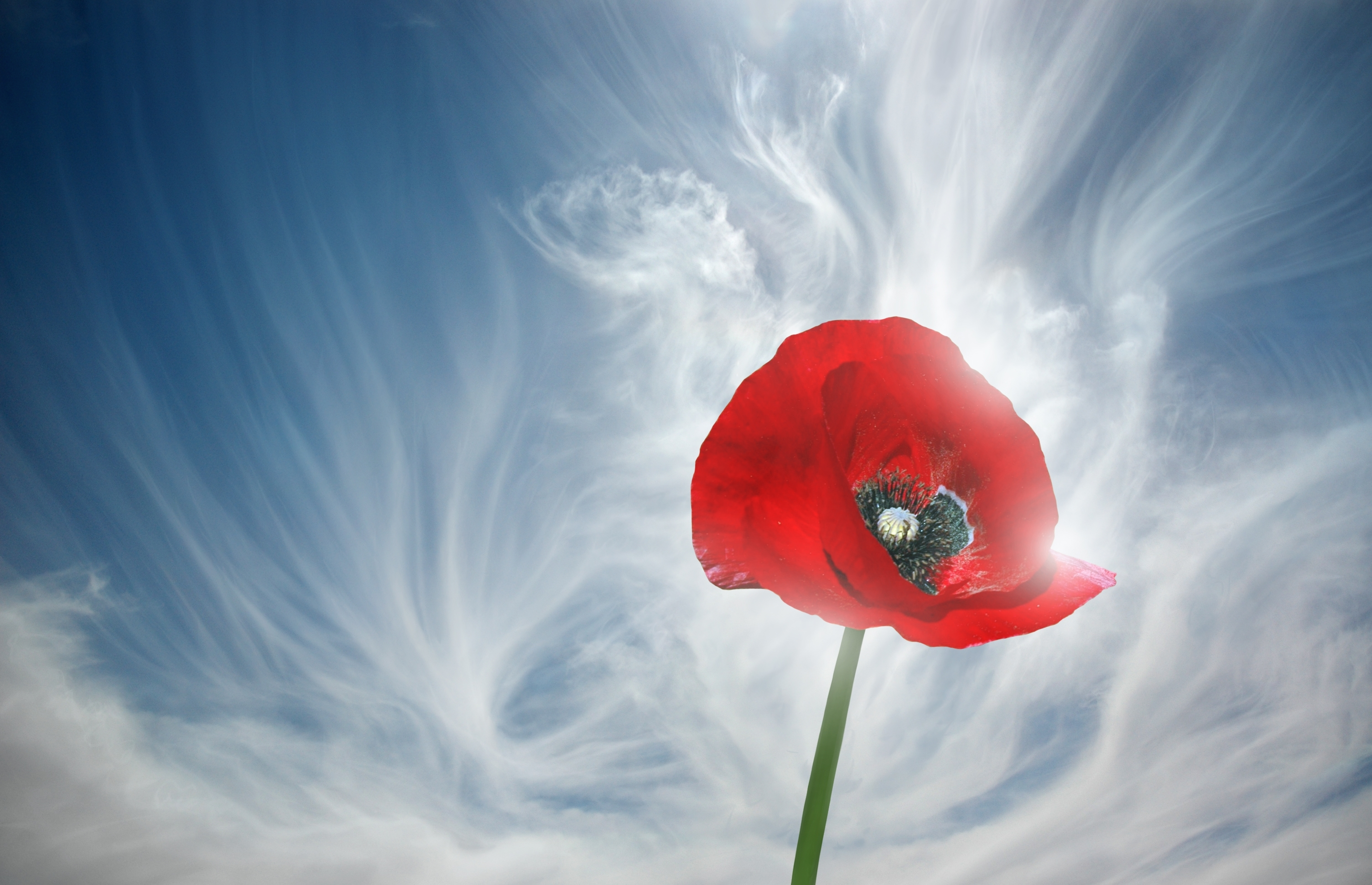 танк небо камни цветы без смс