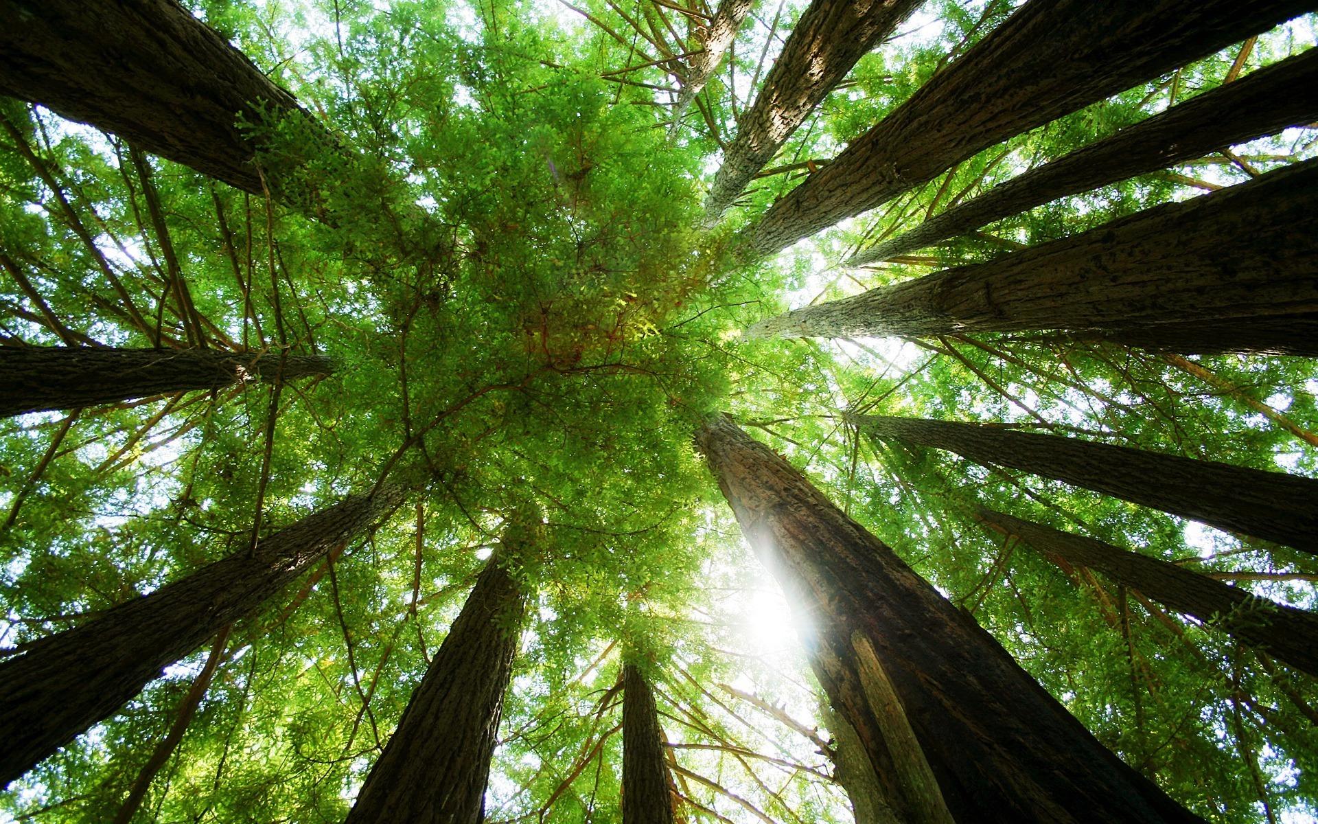 большое дерево  № 1647815 загрузить