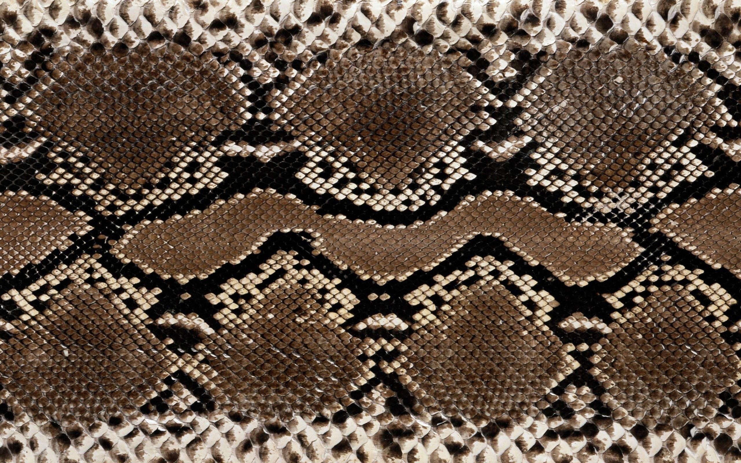 Текстура кожи змеи  № 3269806 загрузить