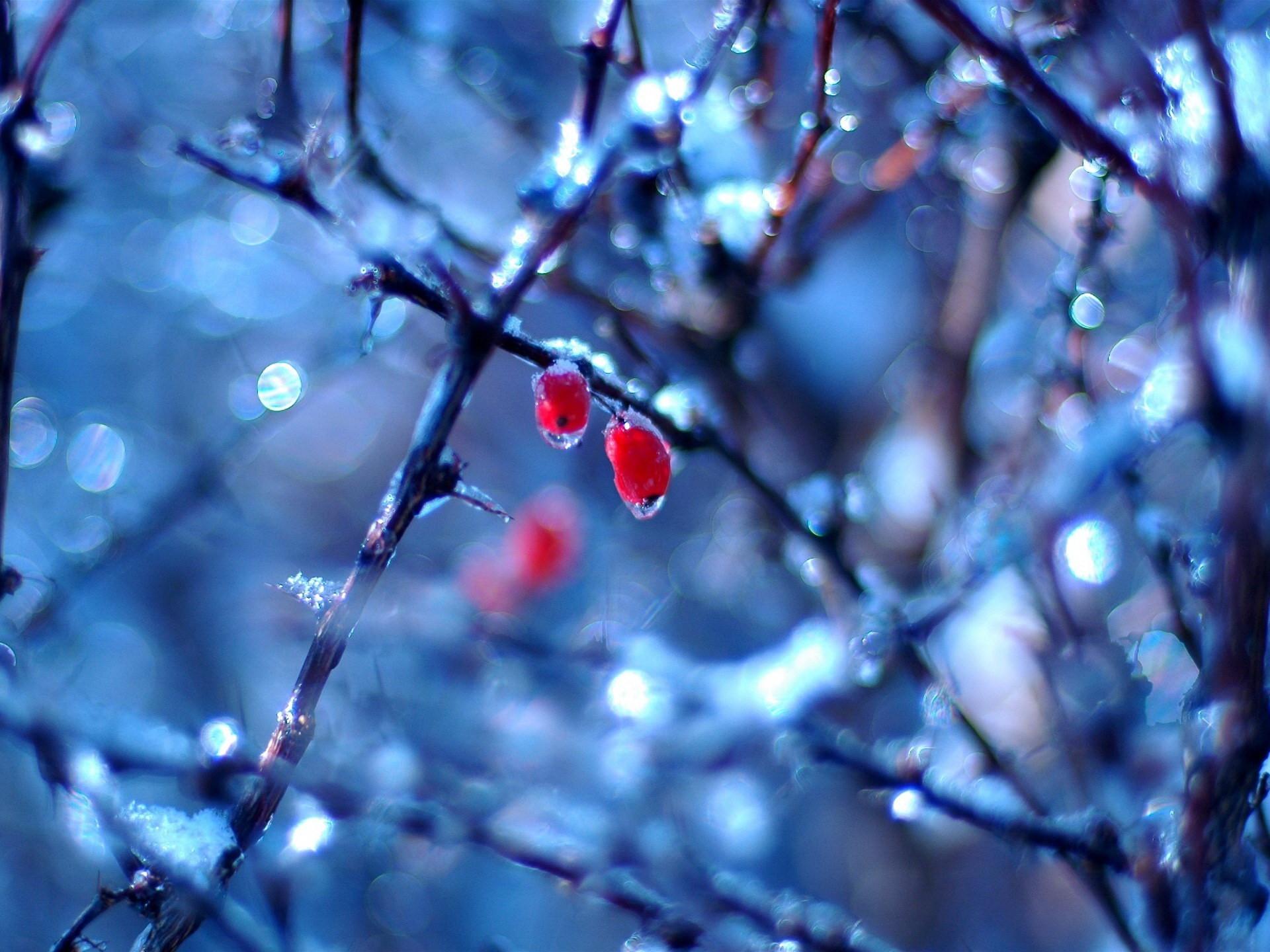 природа ветка снег  № 3090031 без смс