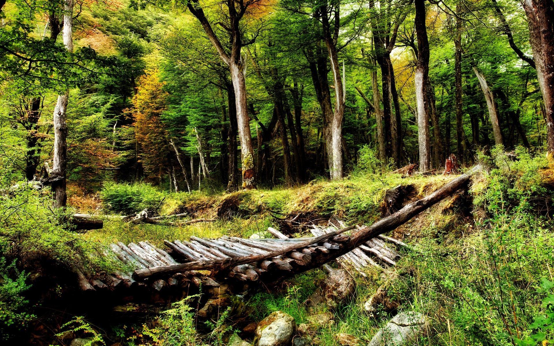 Картинка леса и города