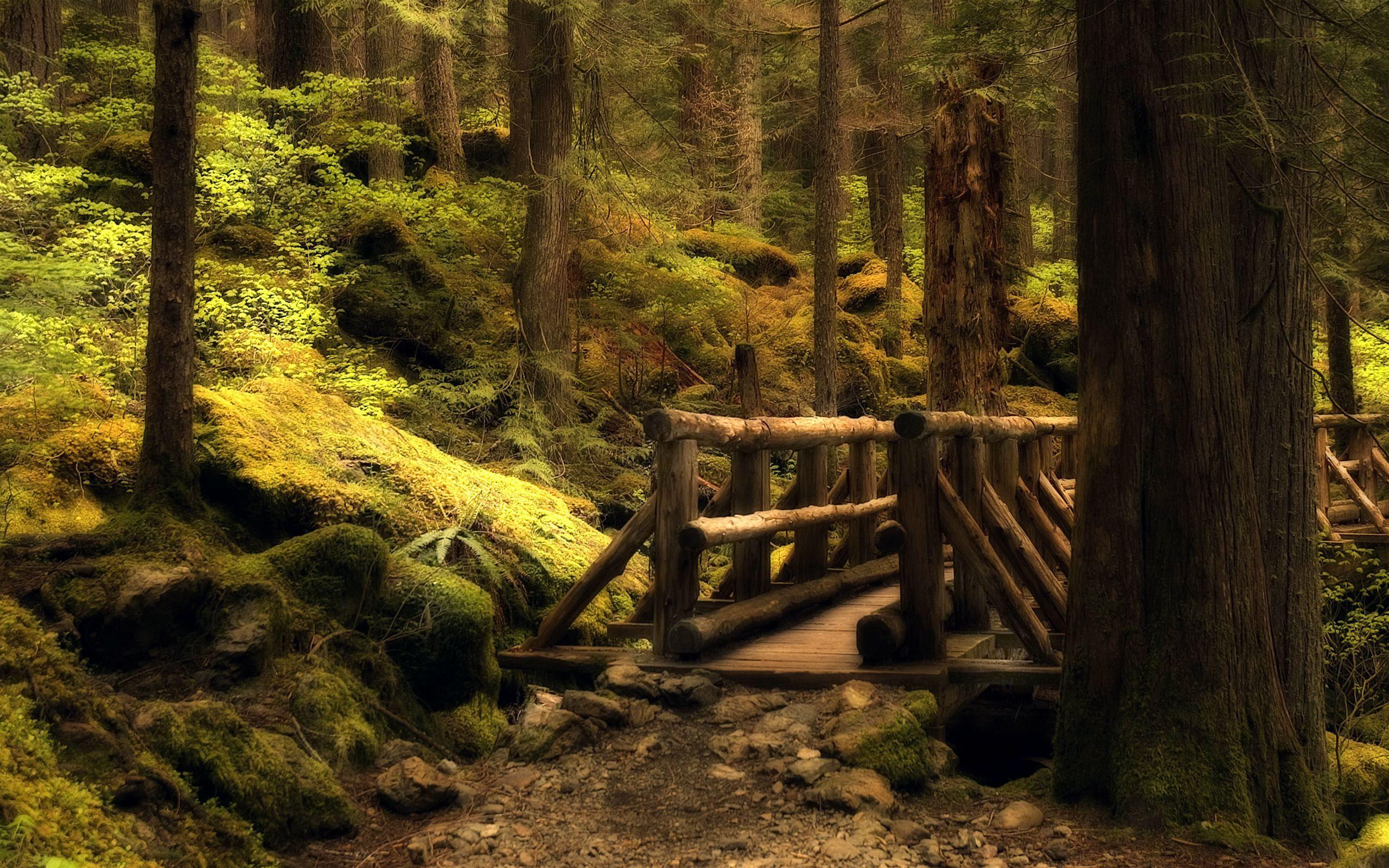 густой лес тропа природа бесплатно