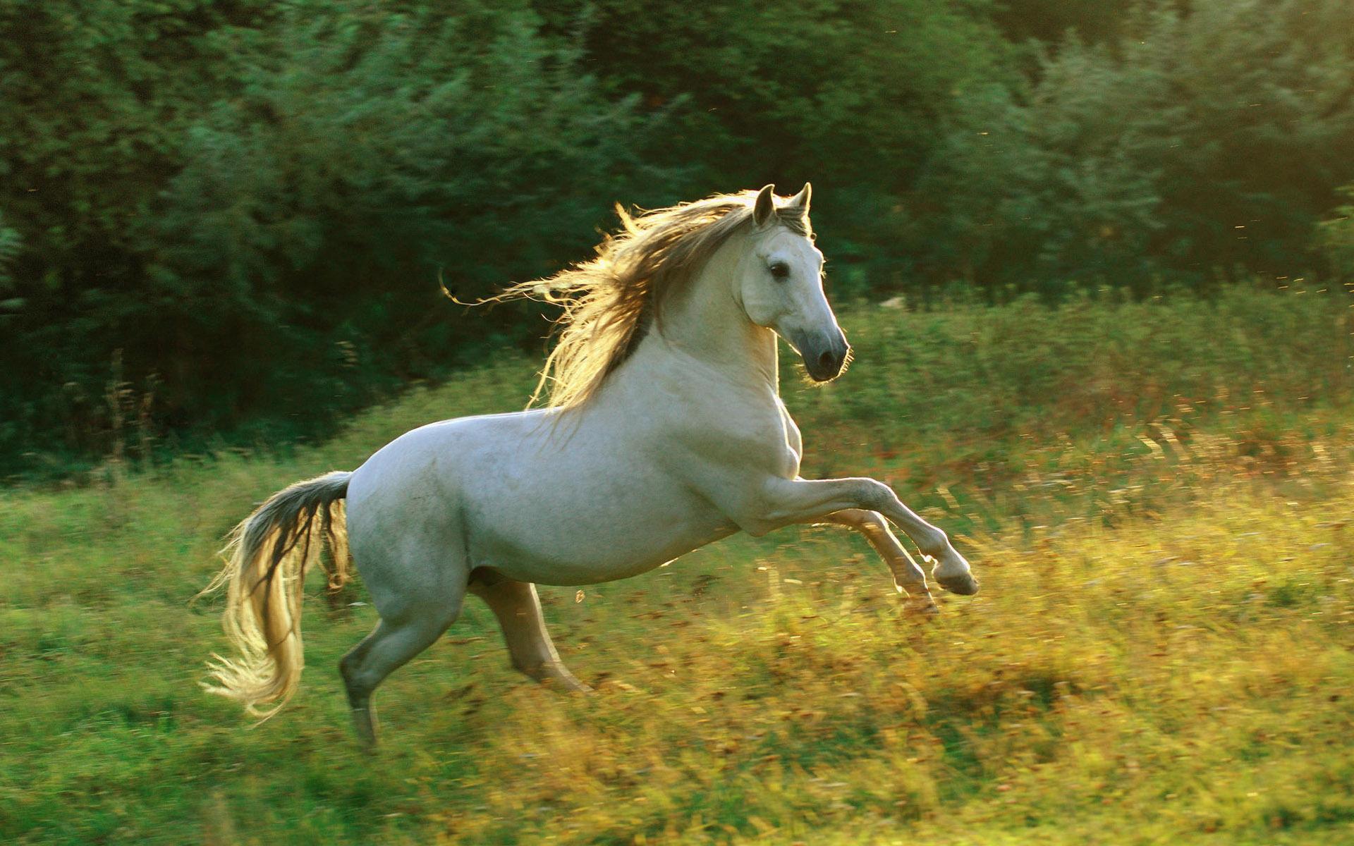 лошадь с гривой  № 3127235  скачать