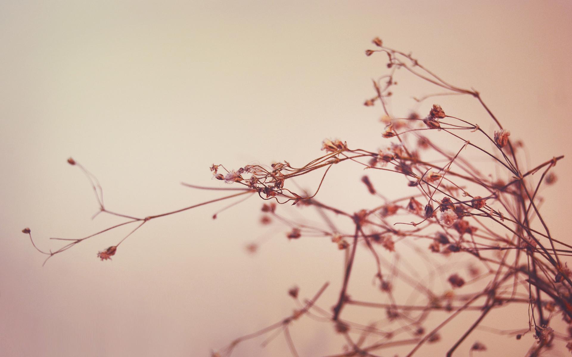 ветка макро зелень цветы без смс