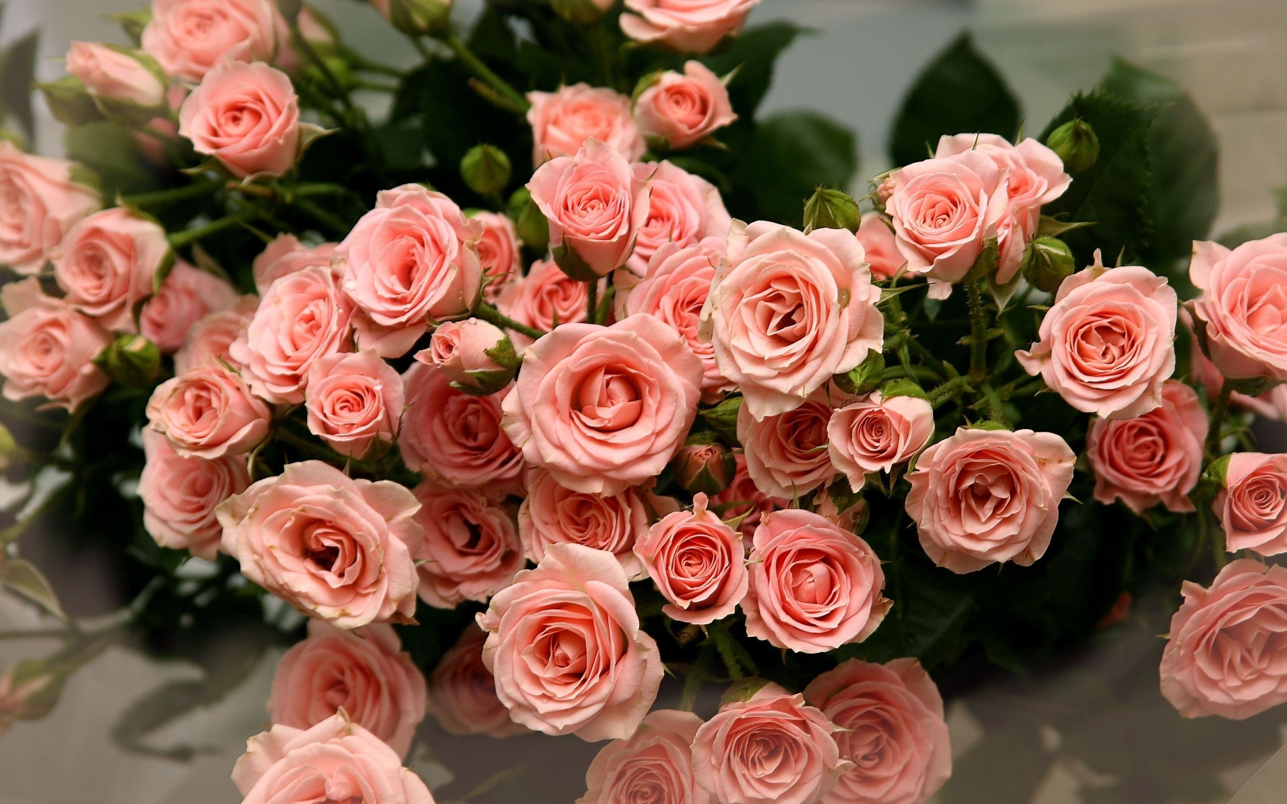 Открытка розовая роза