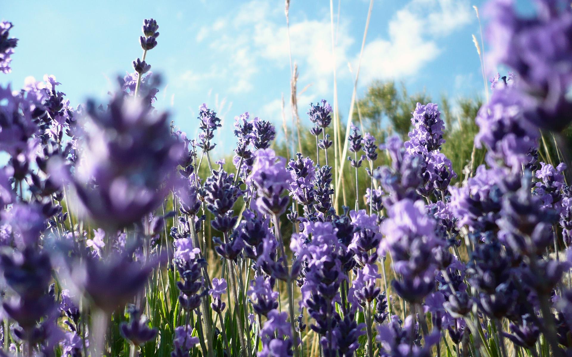 Скачать обои полевые цветы луг лето