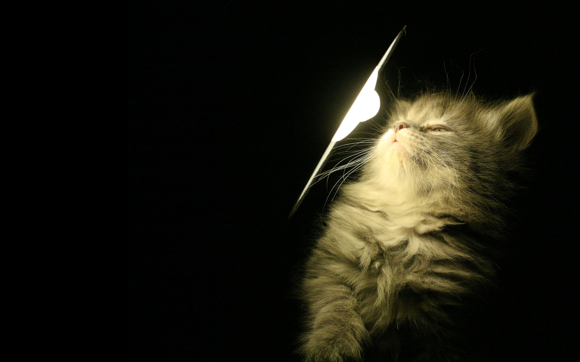 Белый котенок в темноте загрузить