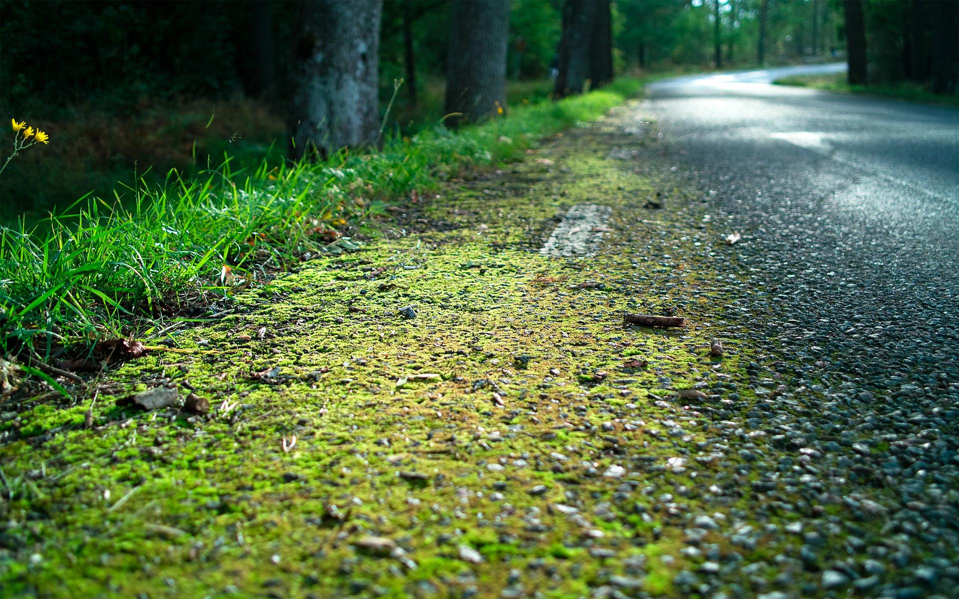 Трава вдоль тропки загрузить