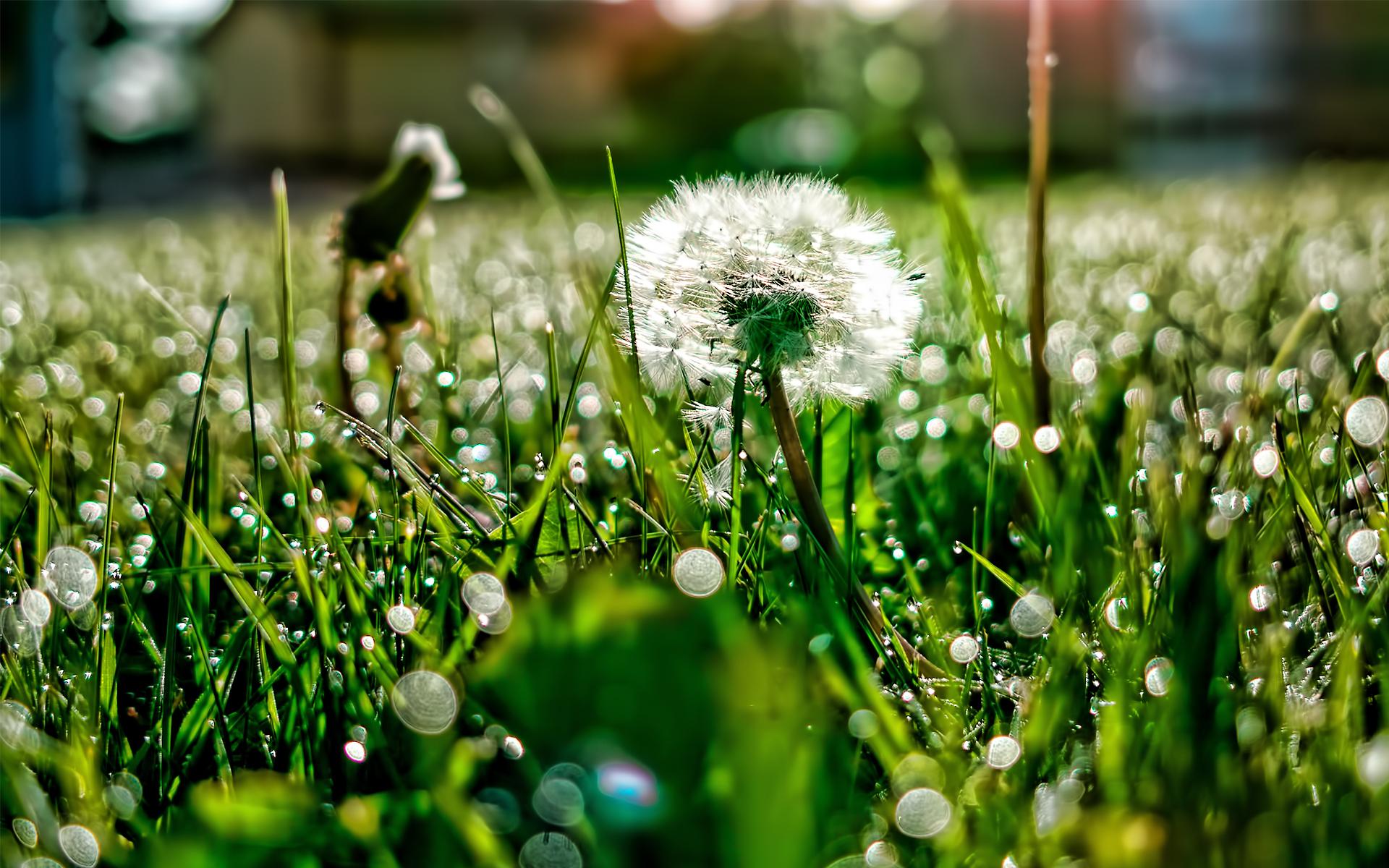 кеды трава цветы без смс