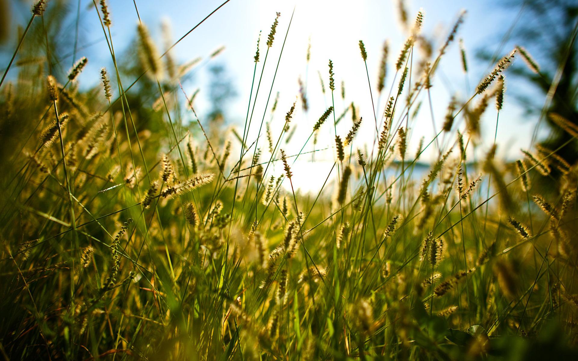 трава вода лето без смс