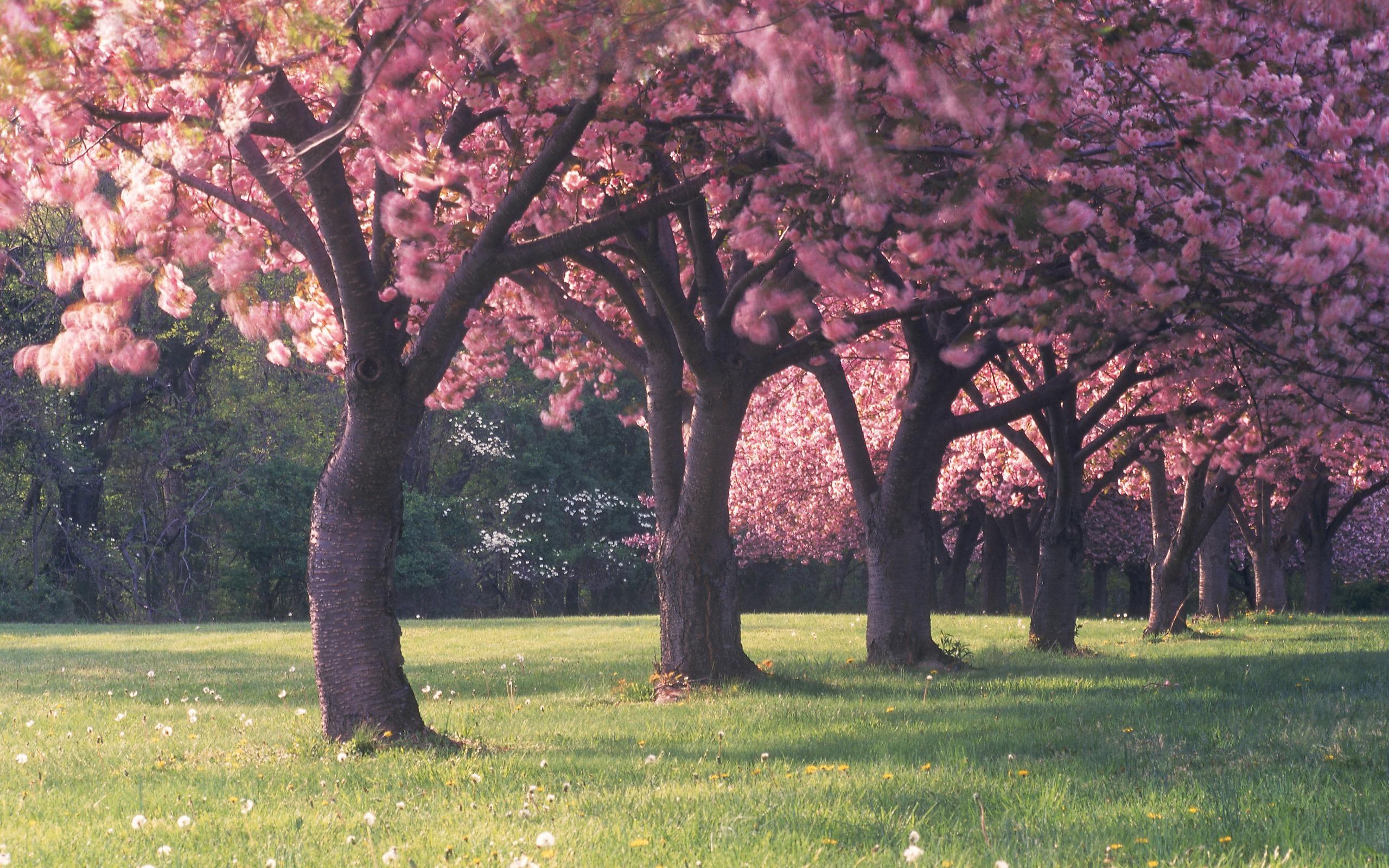 деревья на поляне  № 2050758  скачать