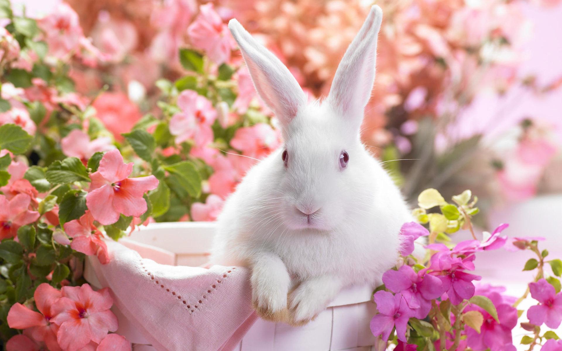 Картинки красивые, видео открытка кролику