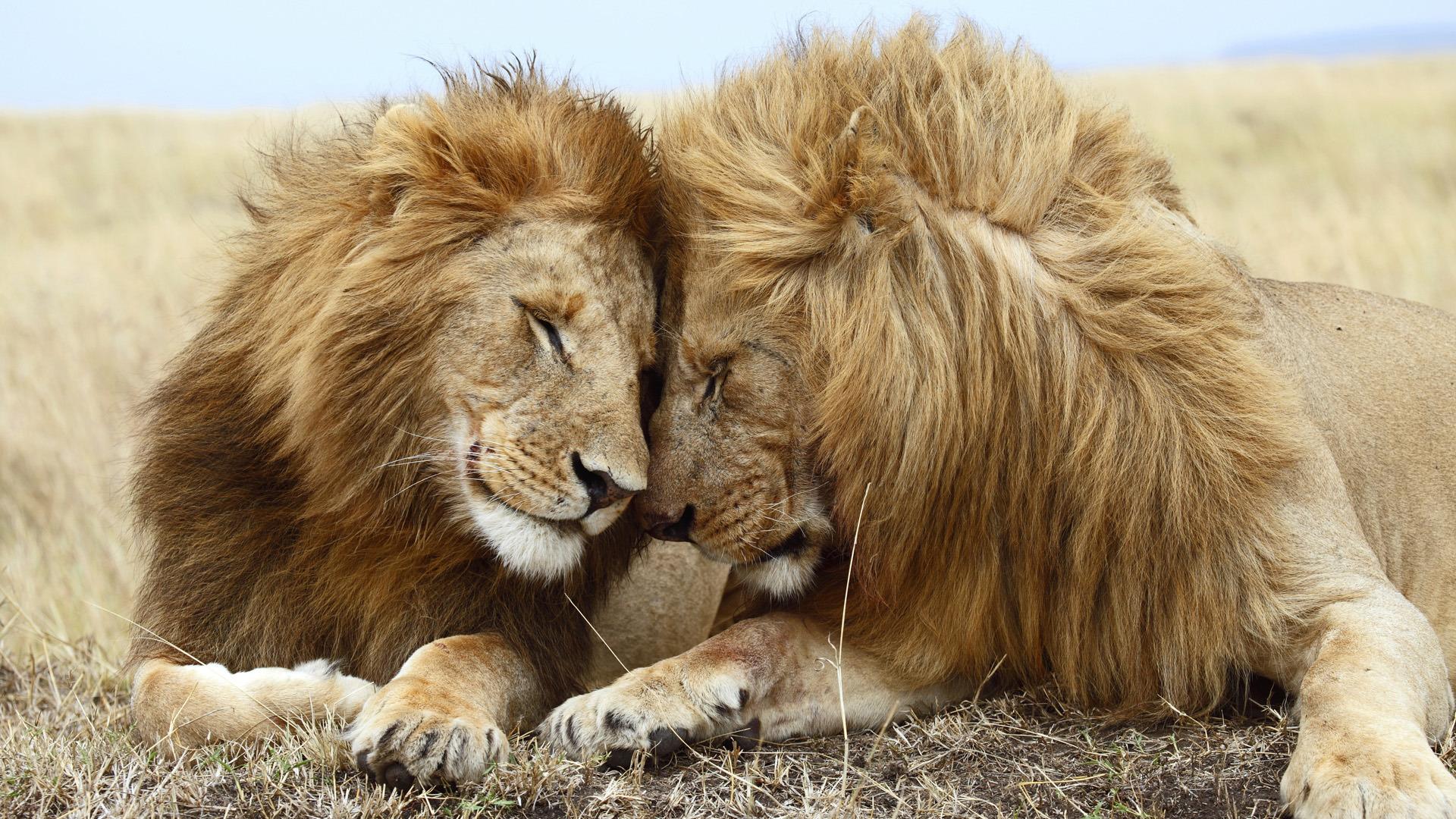 Прикольные картинки про животных и любовь, приятного