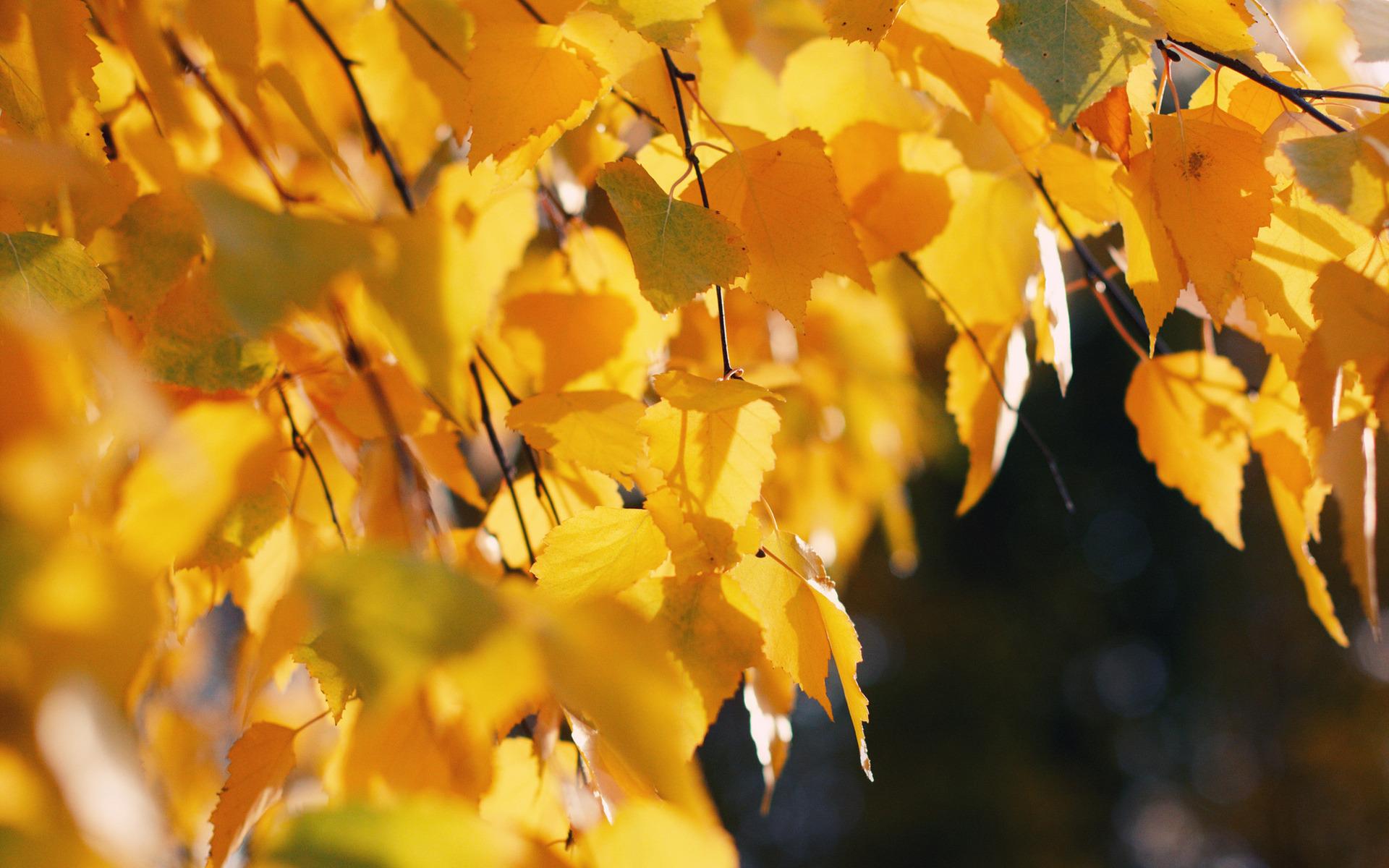 природа деревья листья осень без смс