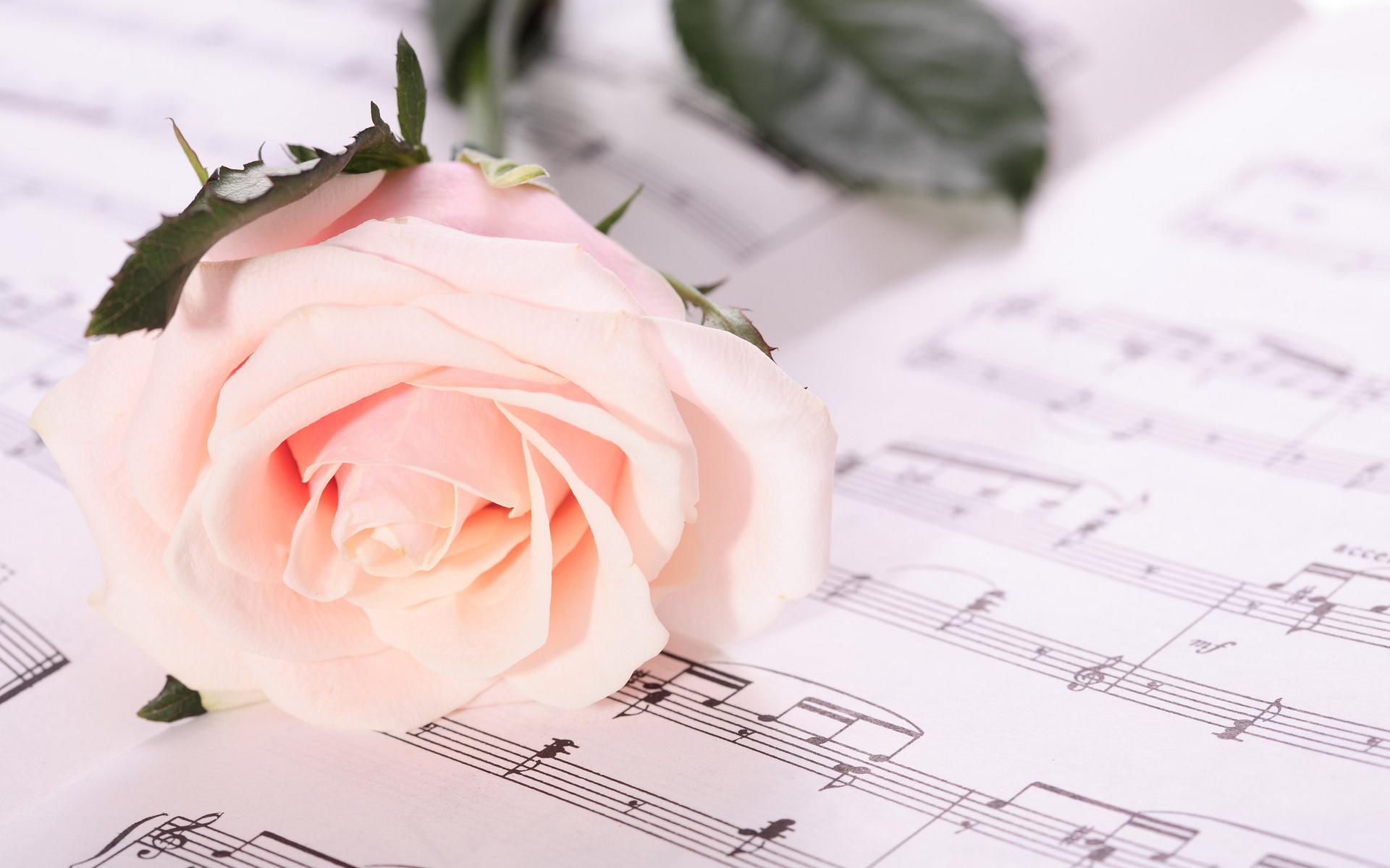 цветы тетрадь листы сердце  № 1351129 без смс