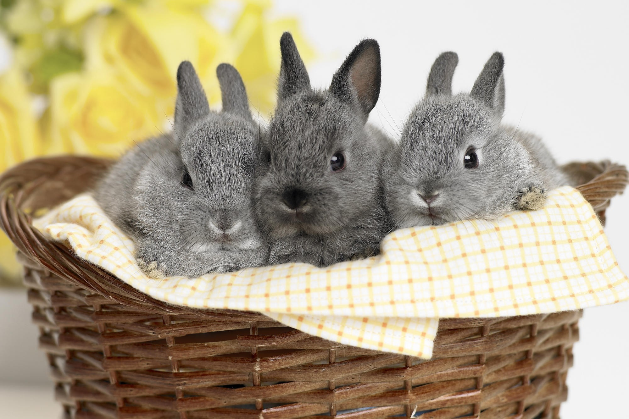 Кролик макро  № 3207759 загрузить
