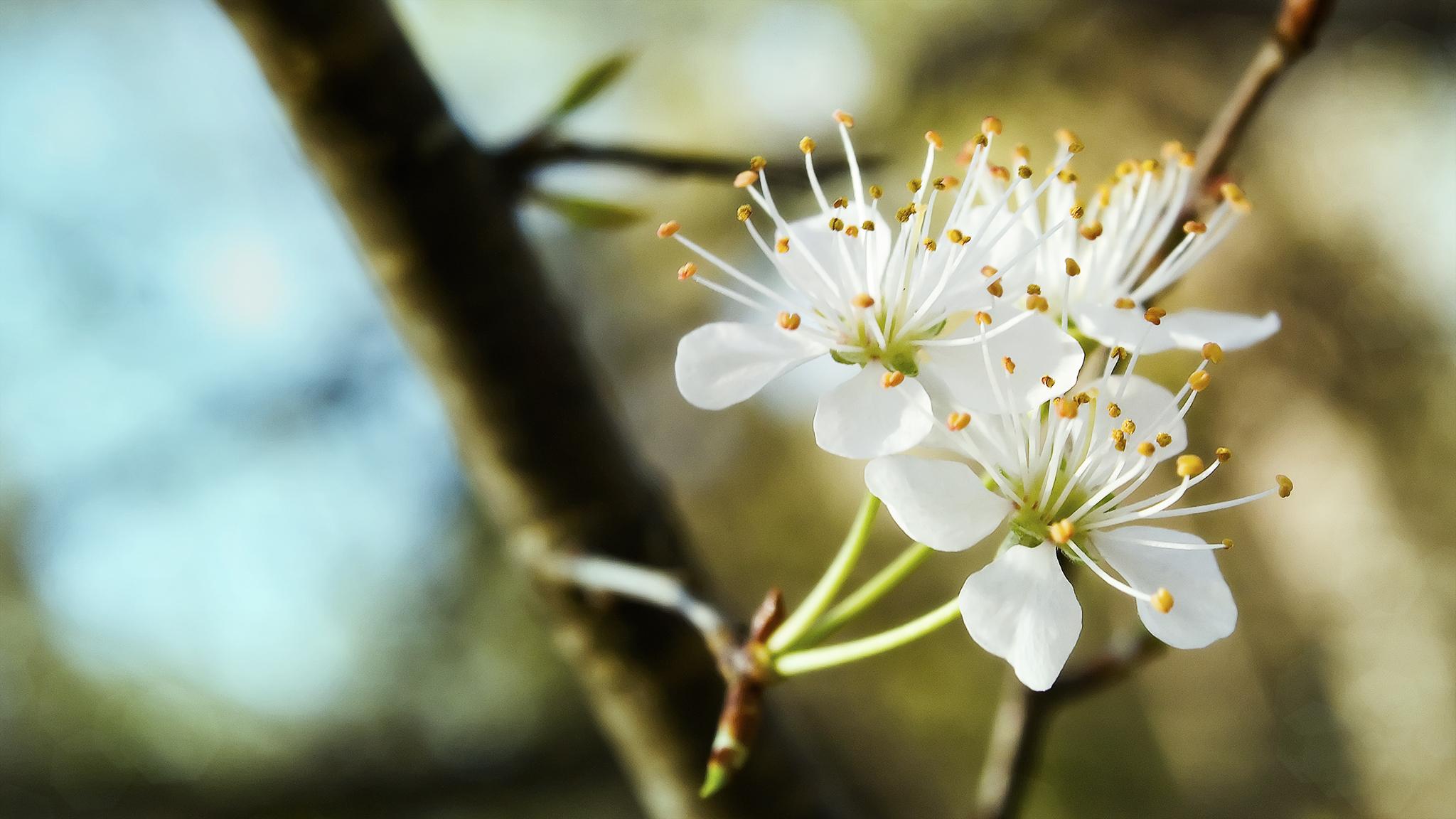 Цветок белый распускающийся смотреть