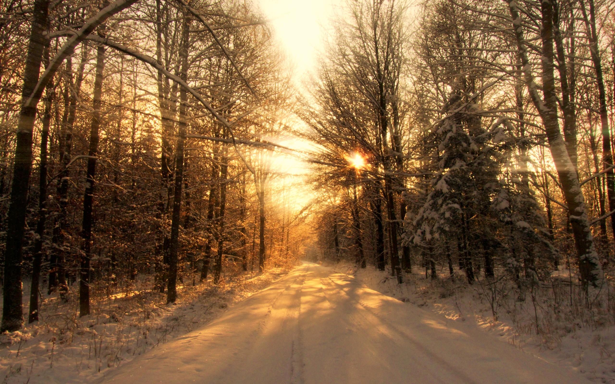 зимний солнечный лес  № 310343  скачать