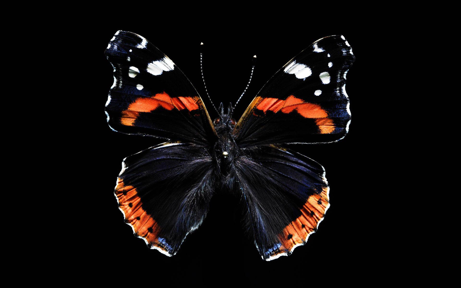 бабочка линии частицы бесплатно