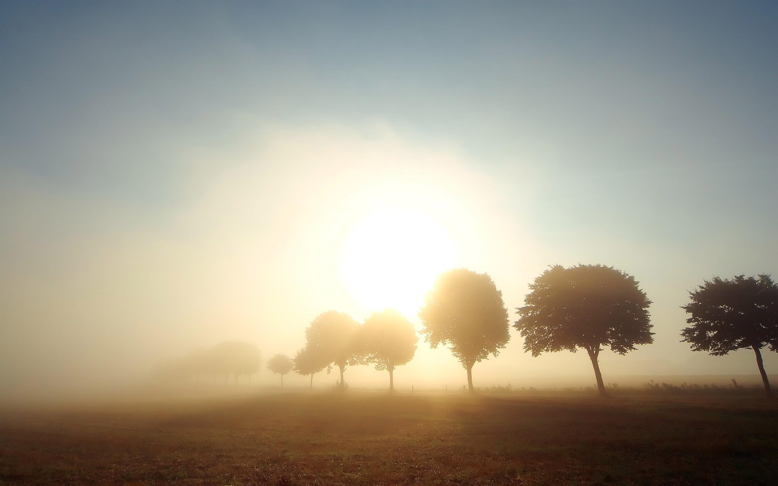природа рассвет деревья  № 1158239 загрузить