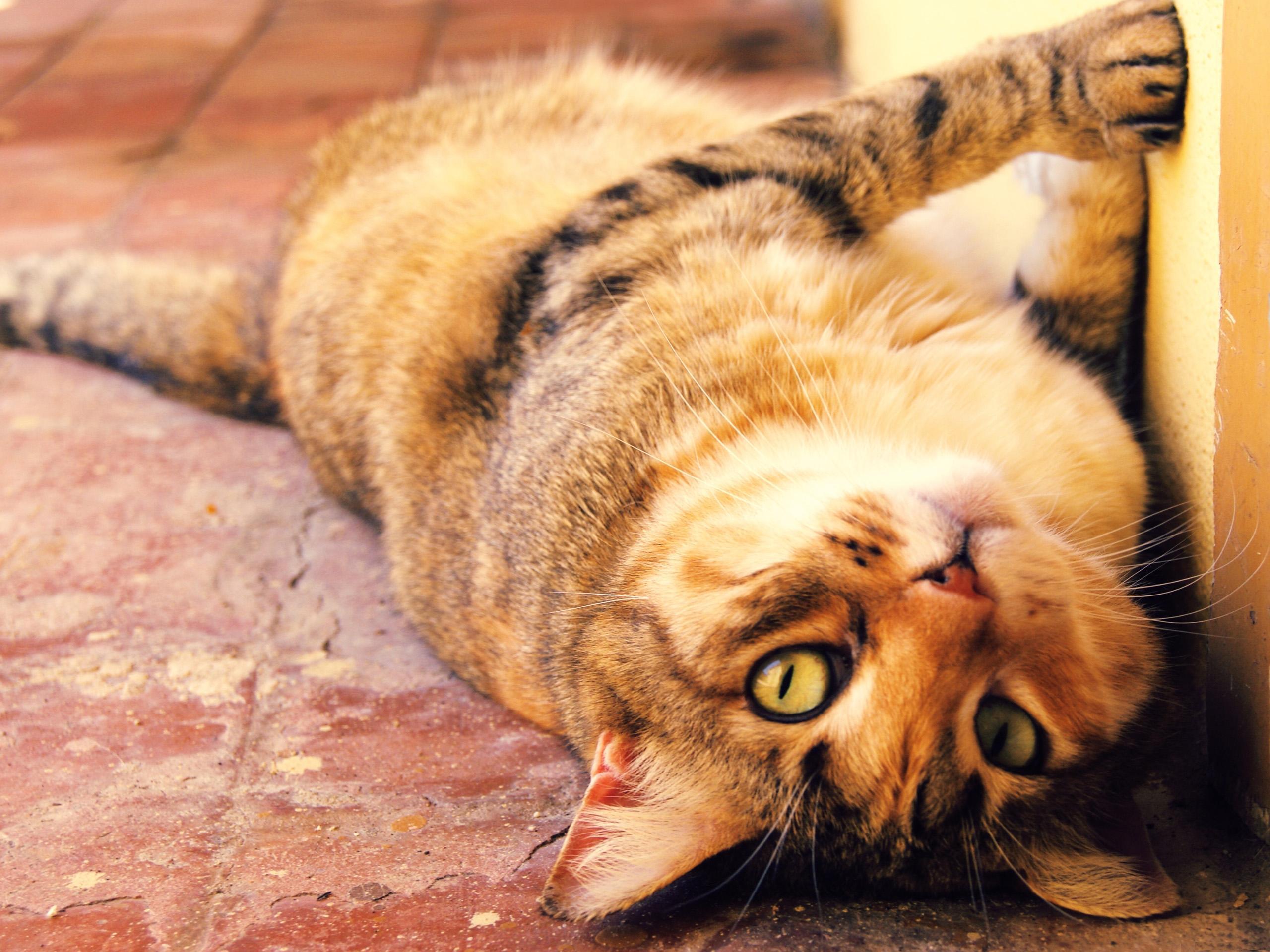 Балдеющий рыжий кот скачать
