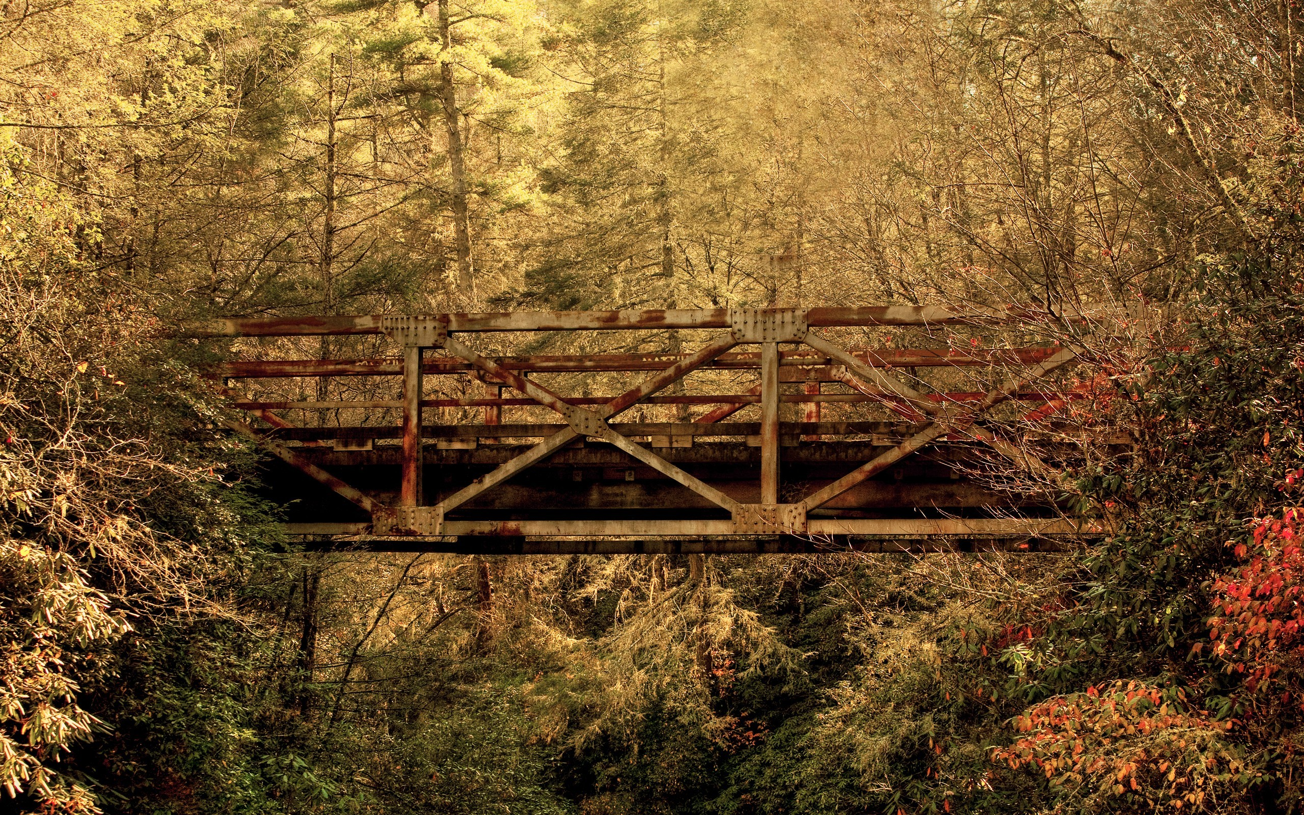 Заброшенная дорога в лесу  № 1103834 загрузить