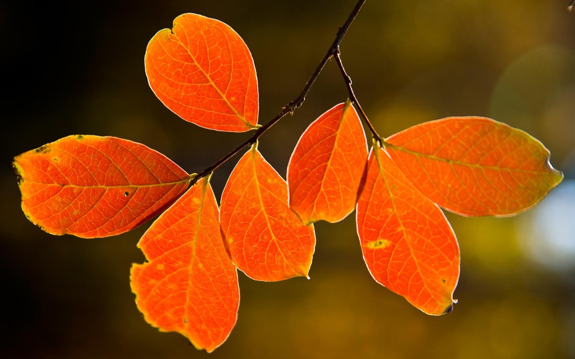 картинки осенних листиков деревьев позже благодаря