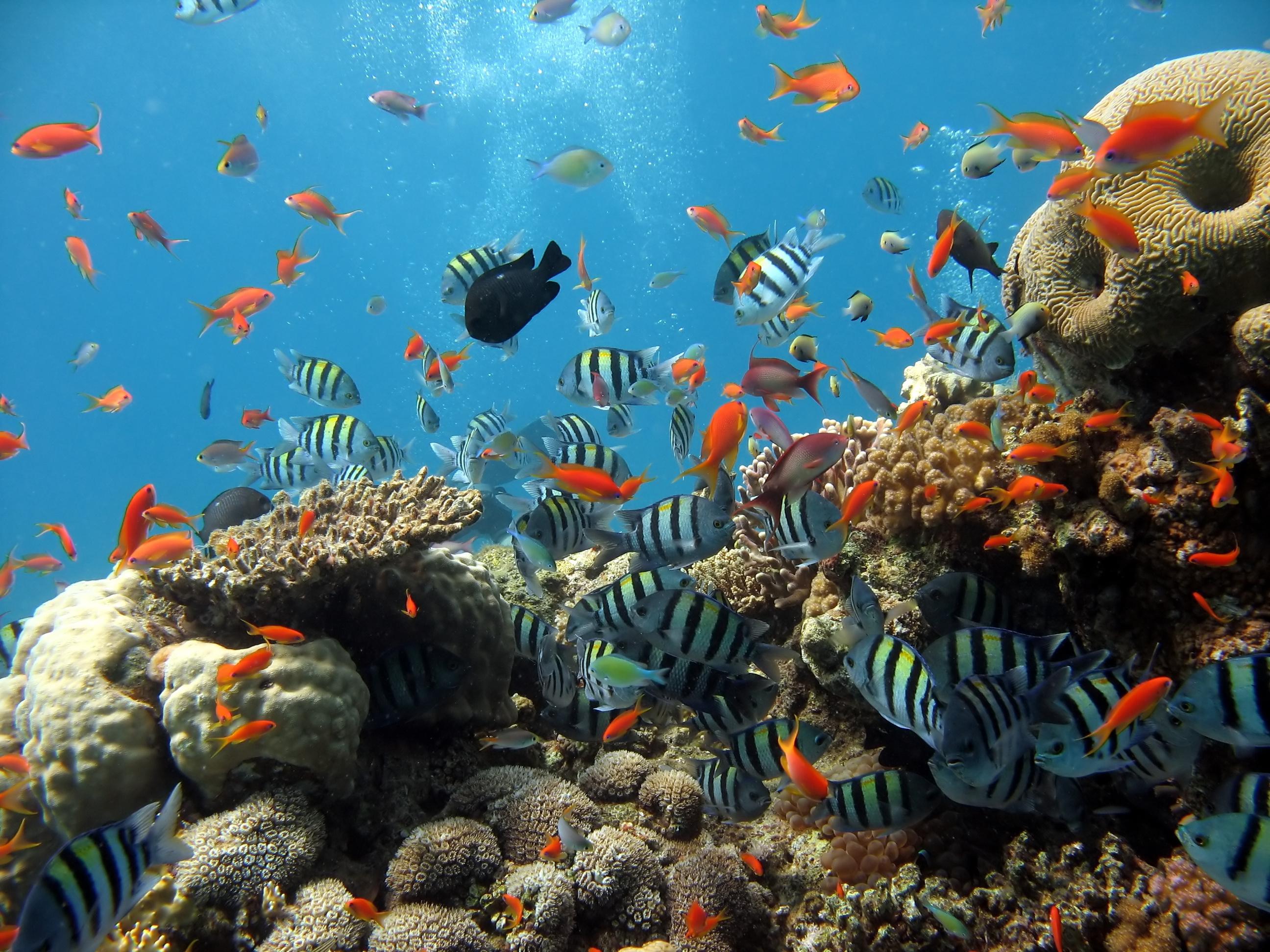 аквариум рыбы кораллы макро без смс