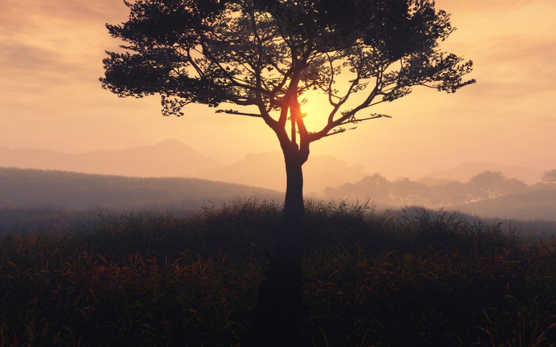 закат,деревья,зелень  № 1076654 бесплатно