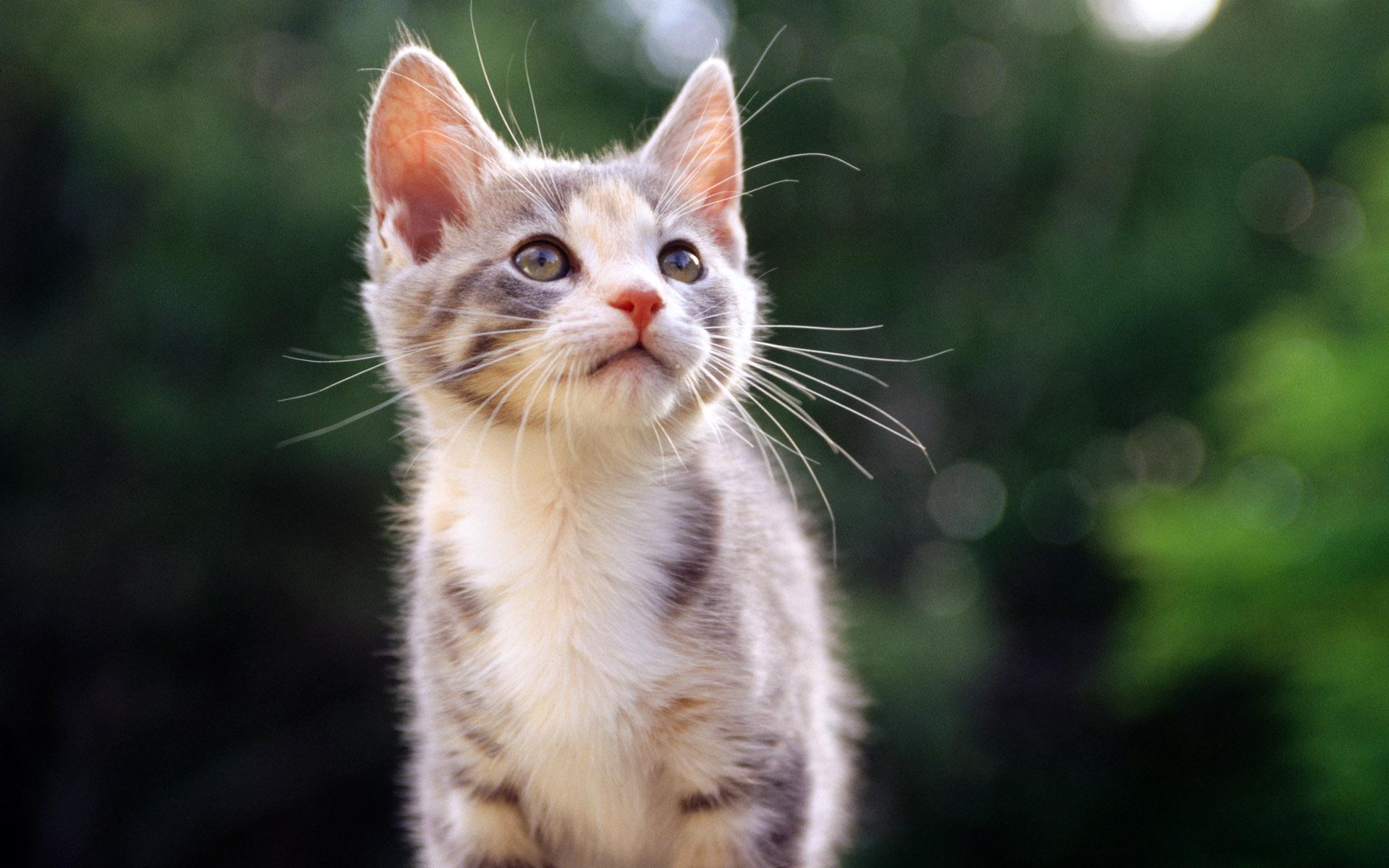 природа животное котенок кот  № 1981127 бесплатно