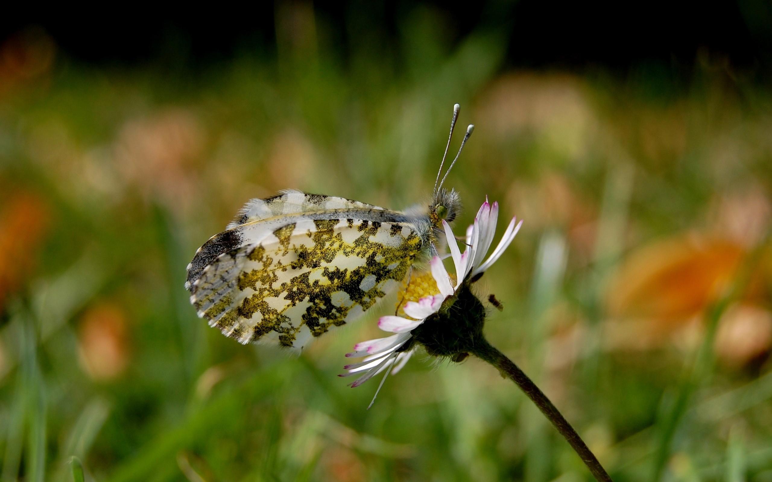 девушки банка природа животные бабочка трава скачать