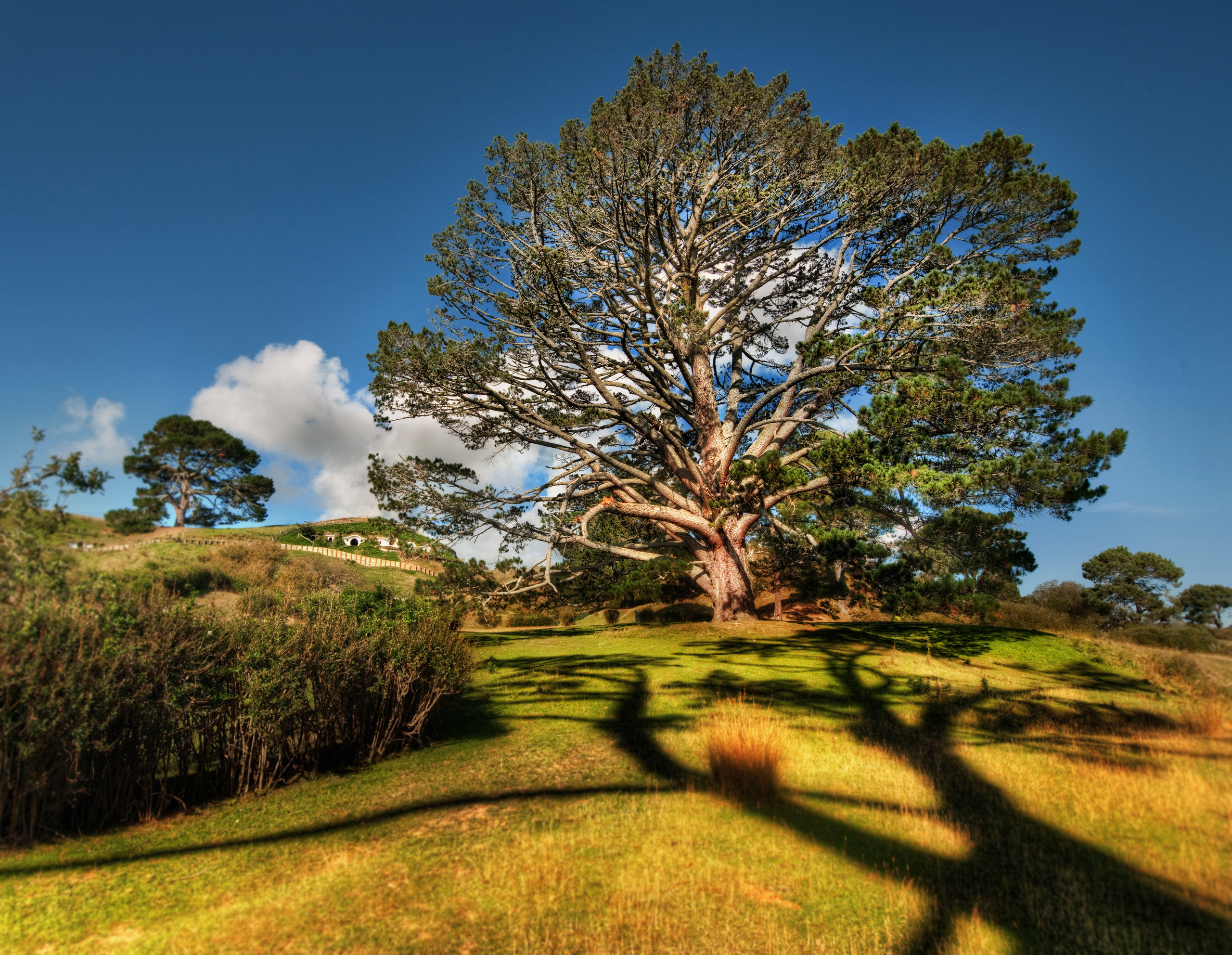 большое дерево  № 1647829 бесплатно