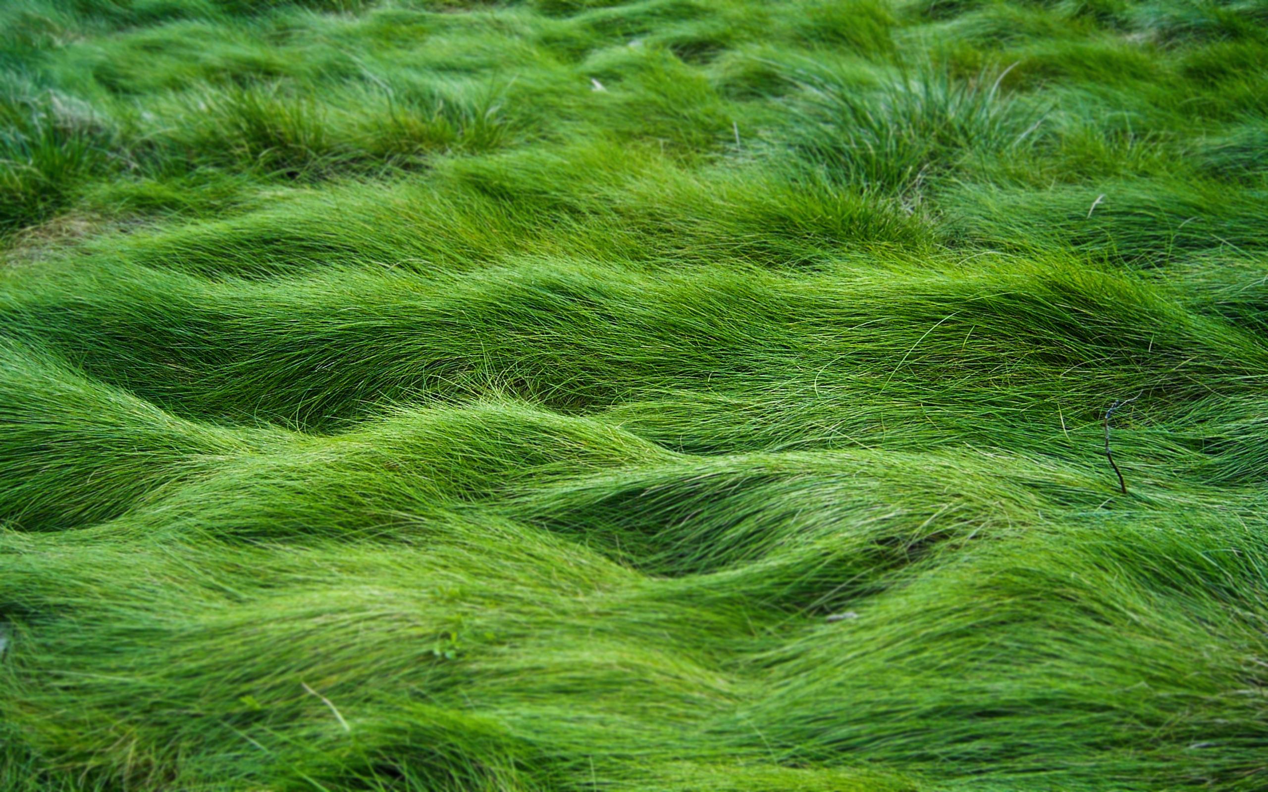 Трава вдоль тропки скачать