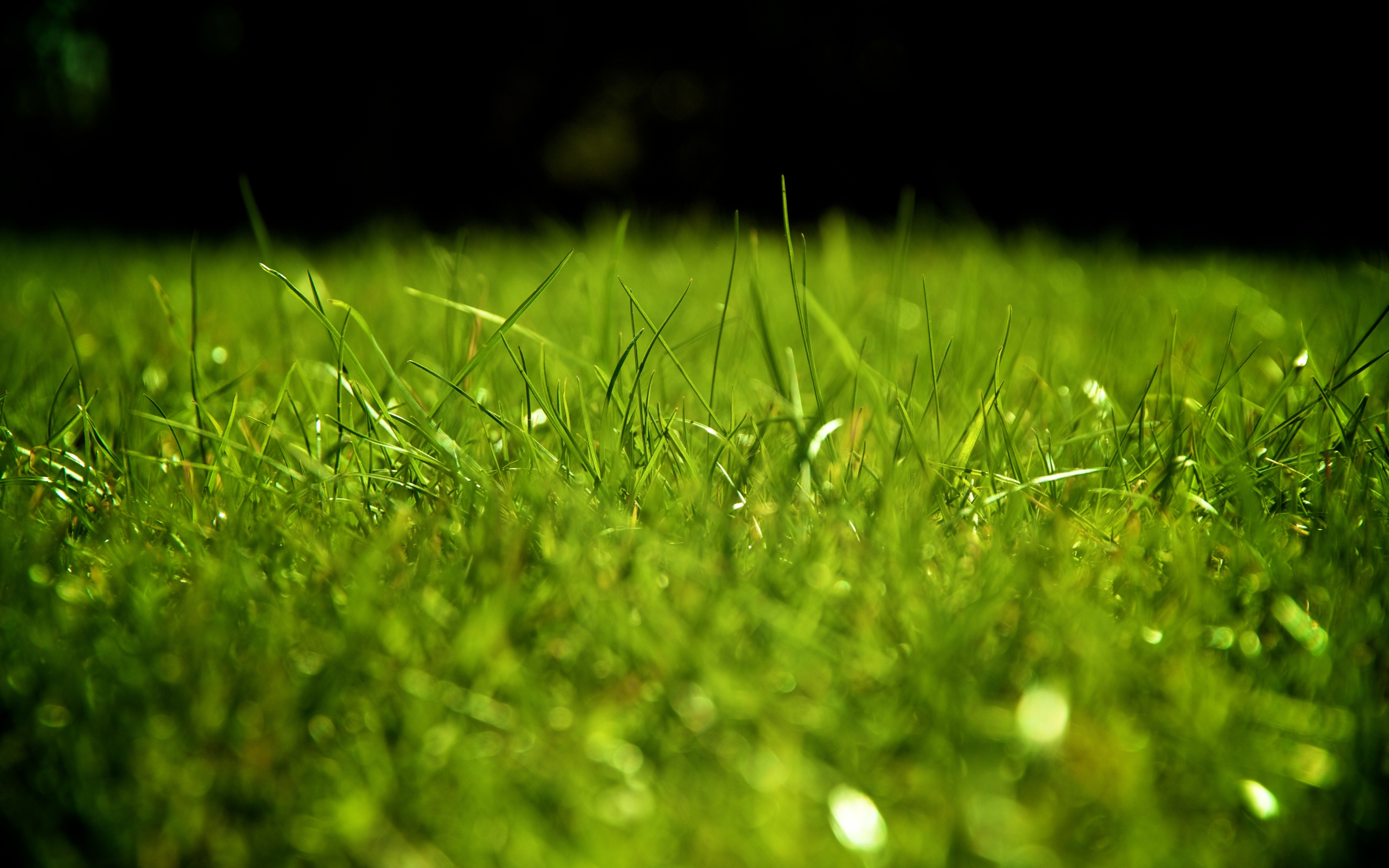 трава без смс