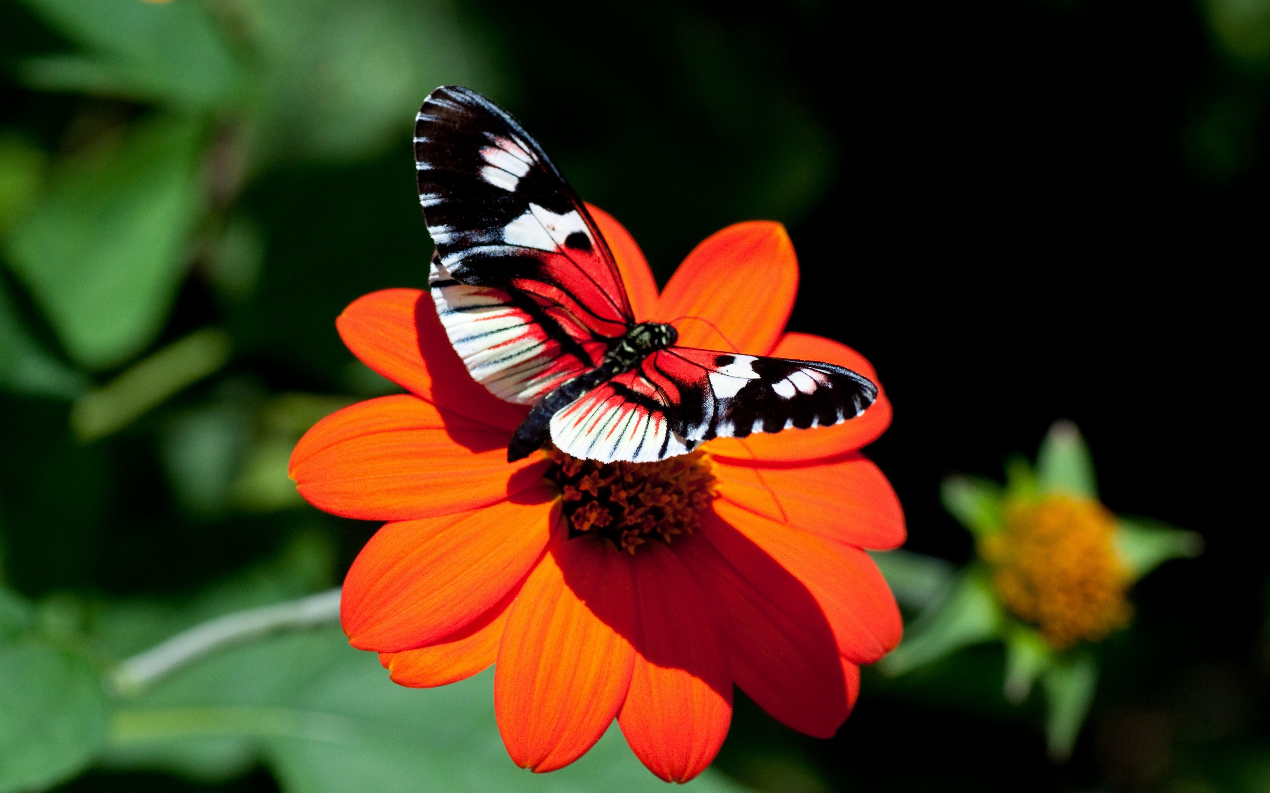 Обои насекомое, цветы. Природа foto 18