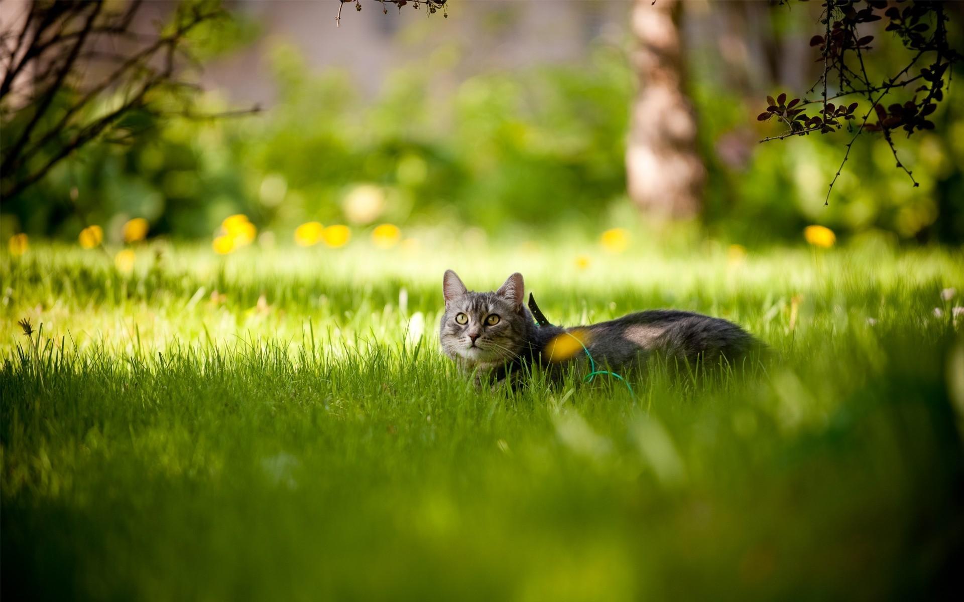 котик возле дерева загрузить
