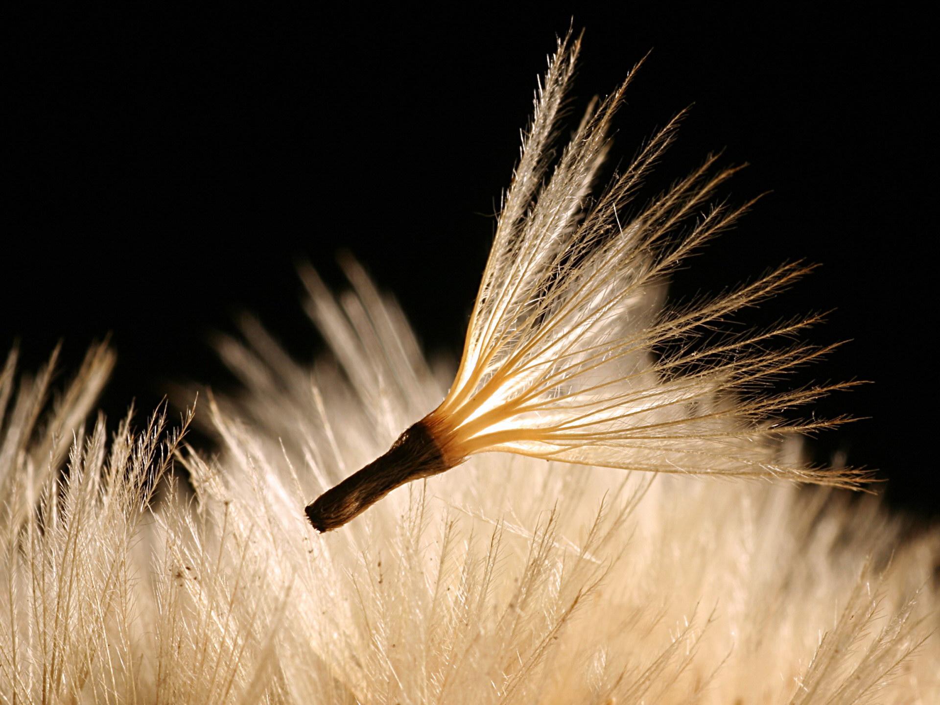 желанию фото летящих семян время