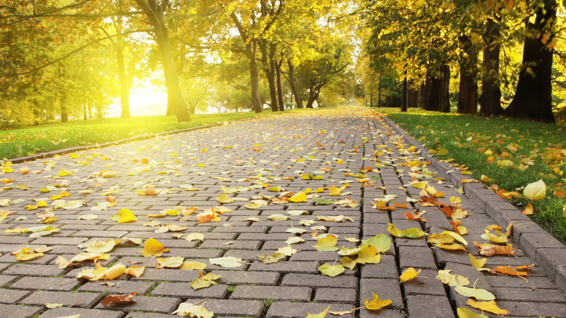 солнечная осень картинка