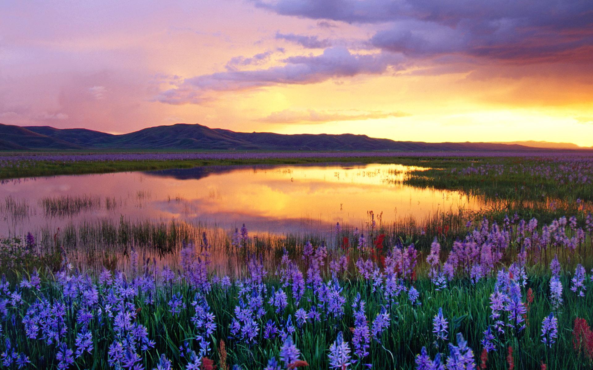 Комплименты, картинки поля с цветами и речкой