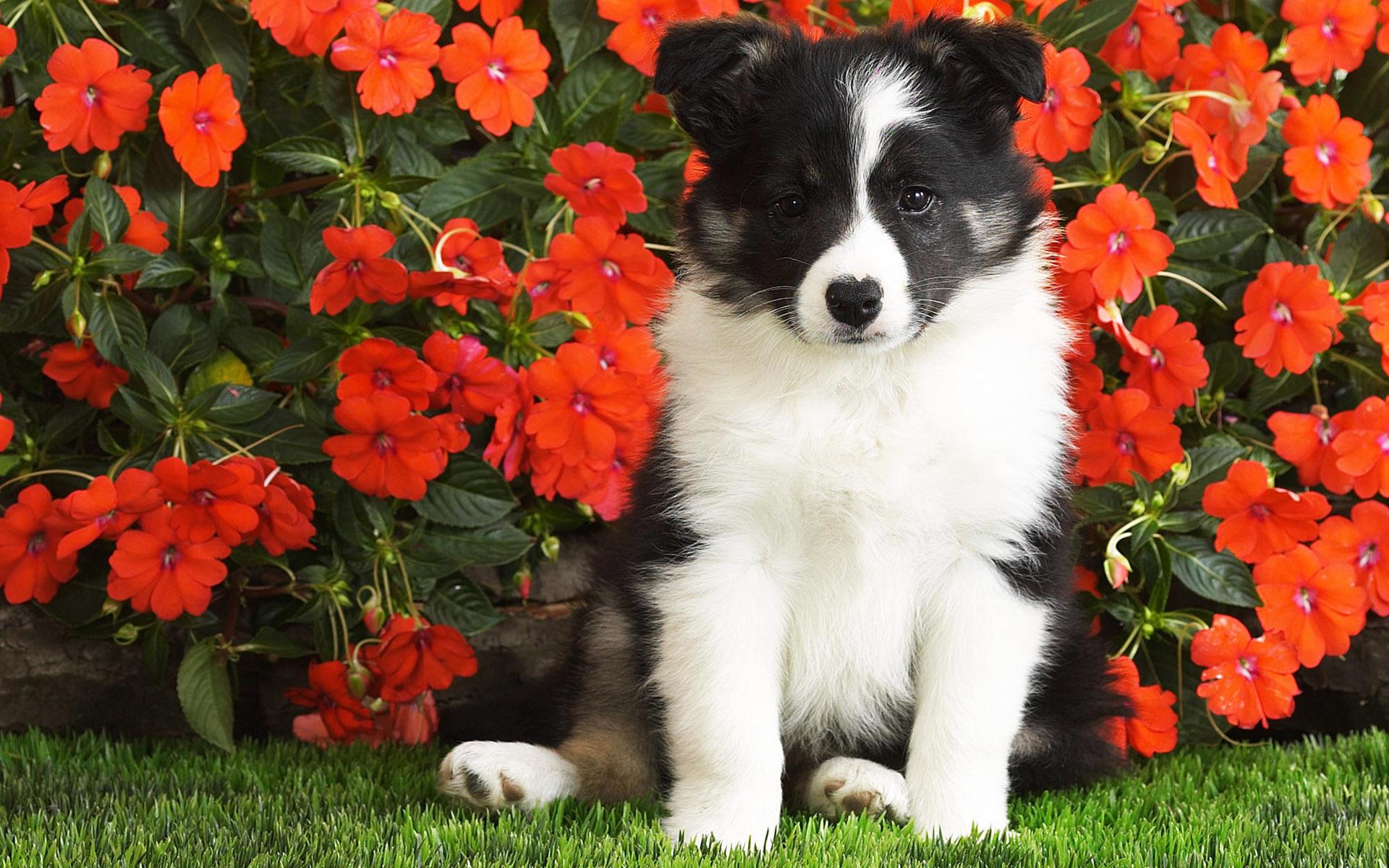 щенок и цветы картинки заранее ищут новые