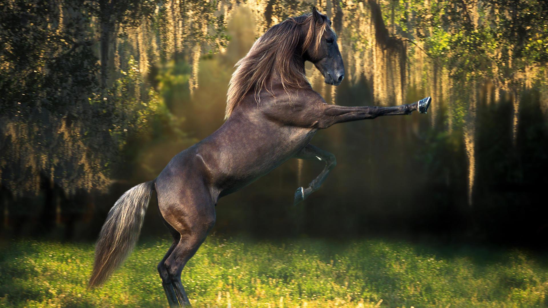 Коричневые лошади у дерева загрузить