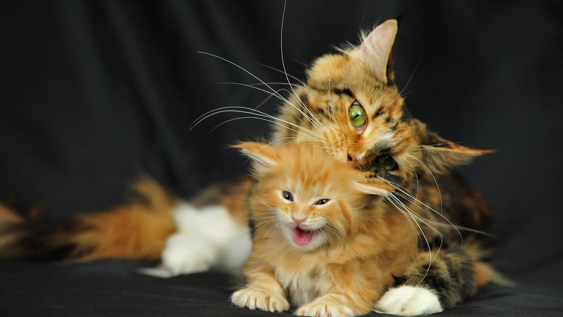 Обои широкого разрешения на рабочий стол с кошками рыжими