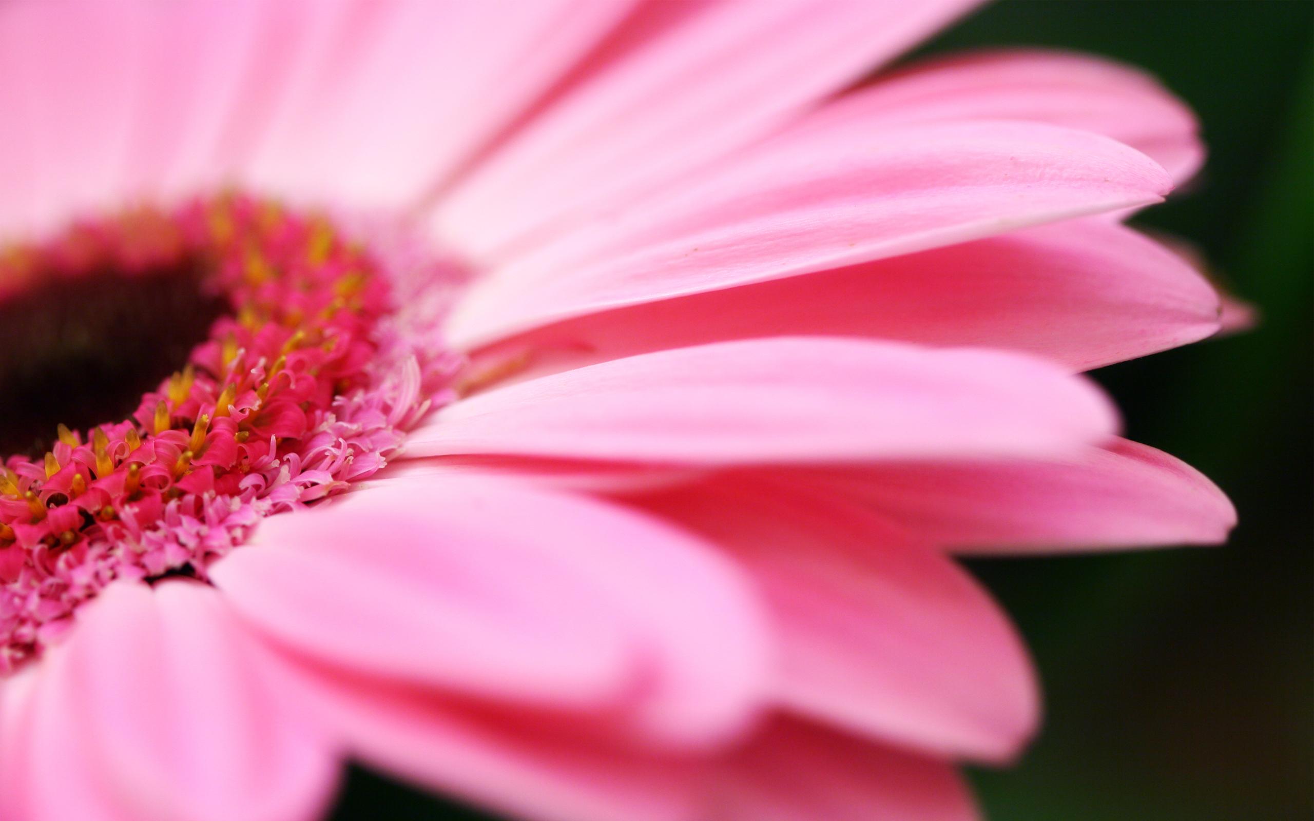 цветы розовые flowers pink загрузить