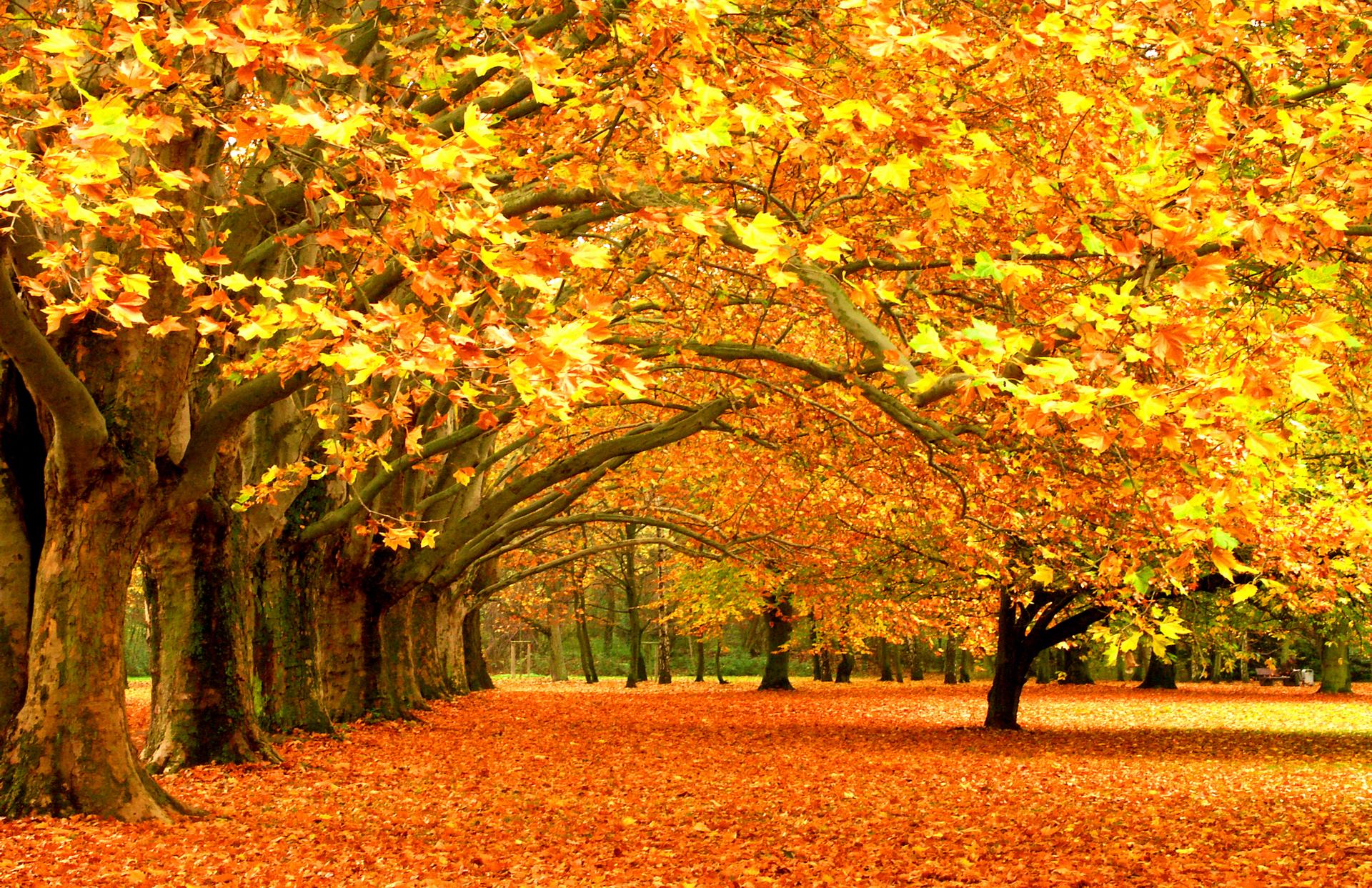 Обои осень золотая