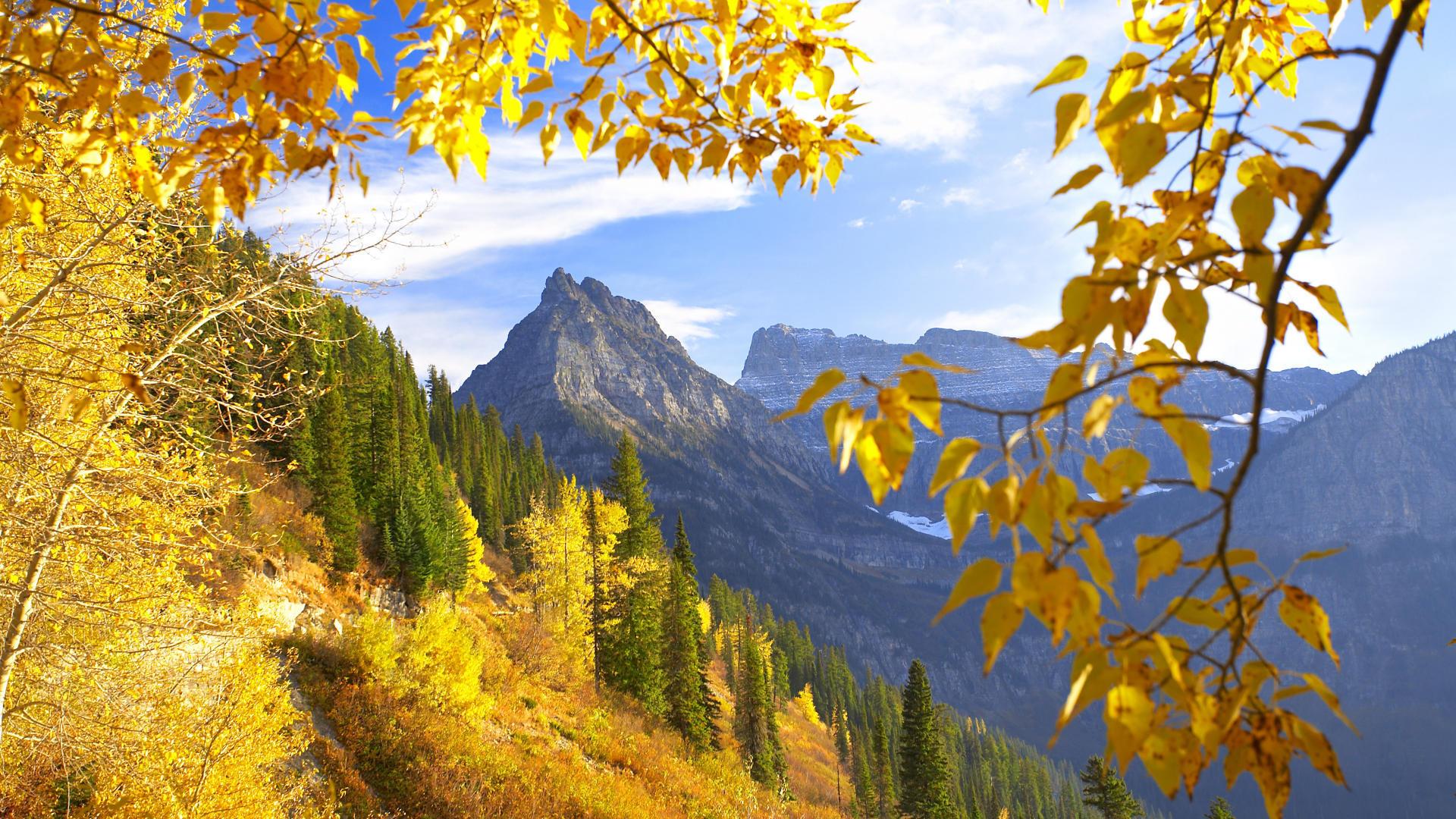 касается когда желтеют листья в архызе касается