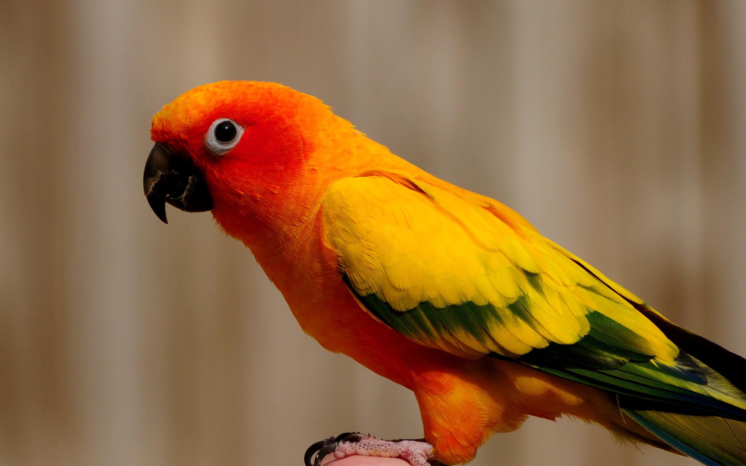 Желтая птичка без смс