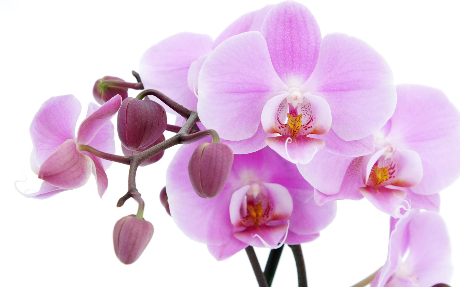 открытка с белыми орхидеями морского коктейля