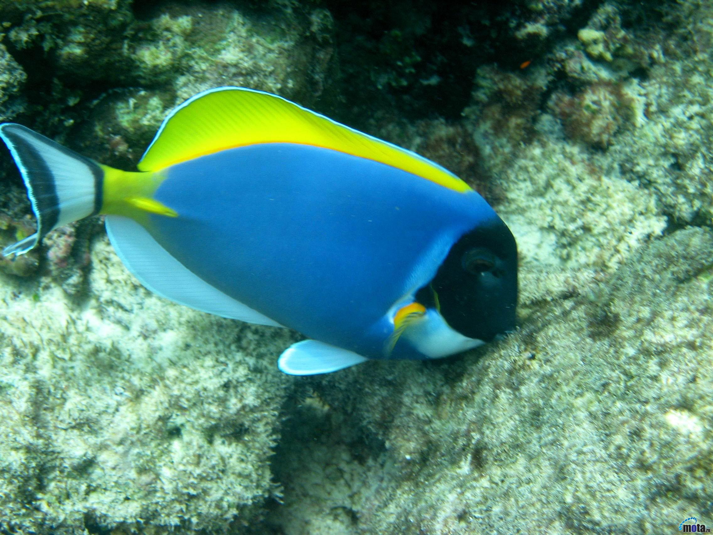 проверены названия и фото океанских рыб конкурса