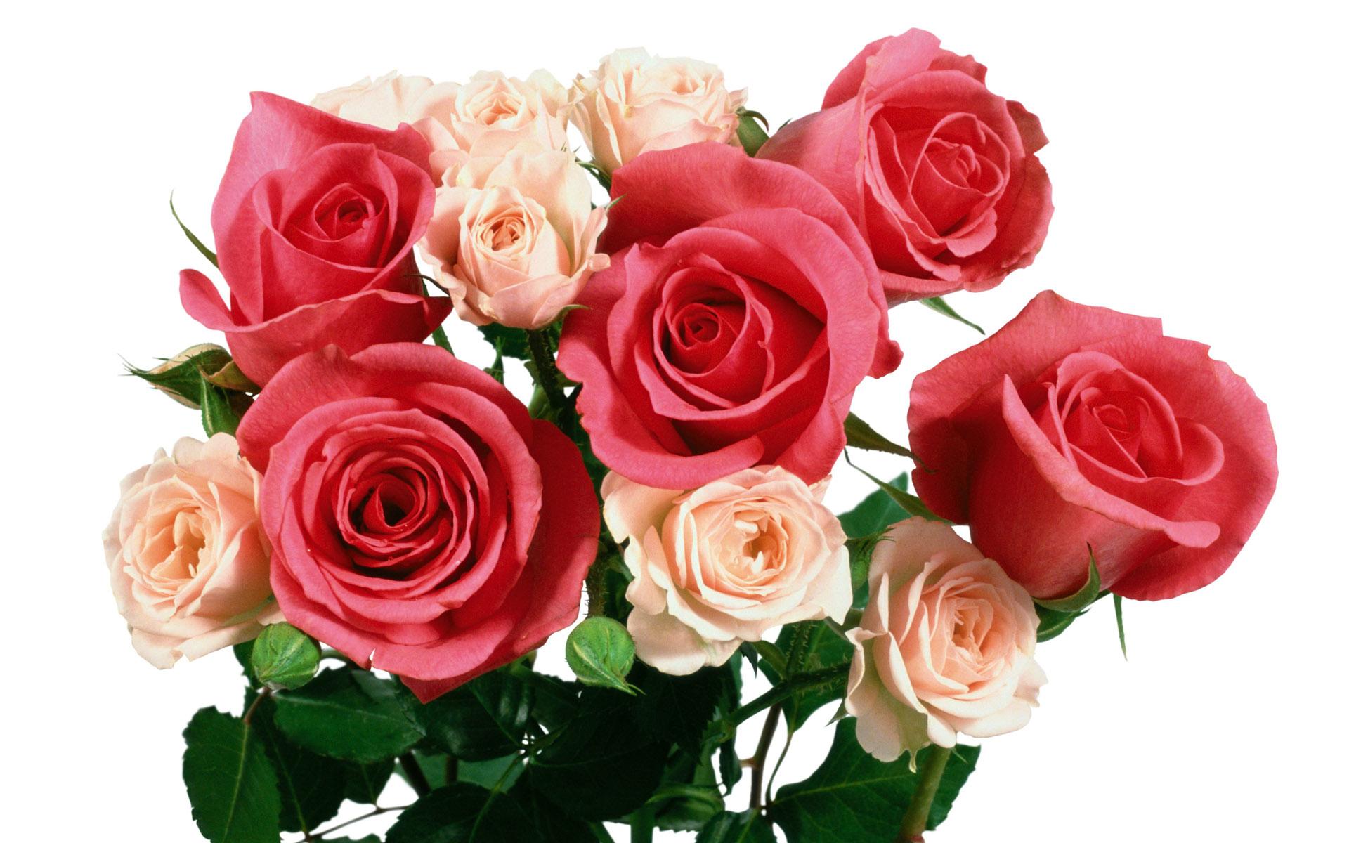 Как делать, открытки поздравляю роза